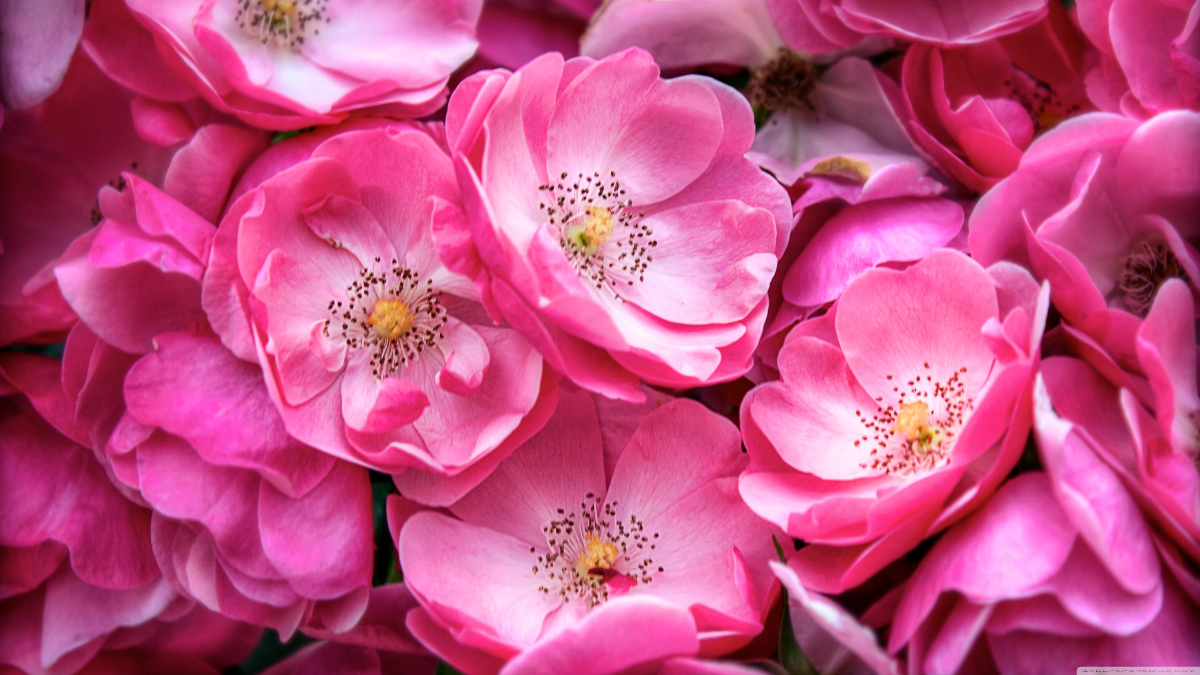 Фото цветы для обоев
