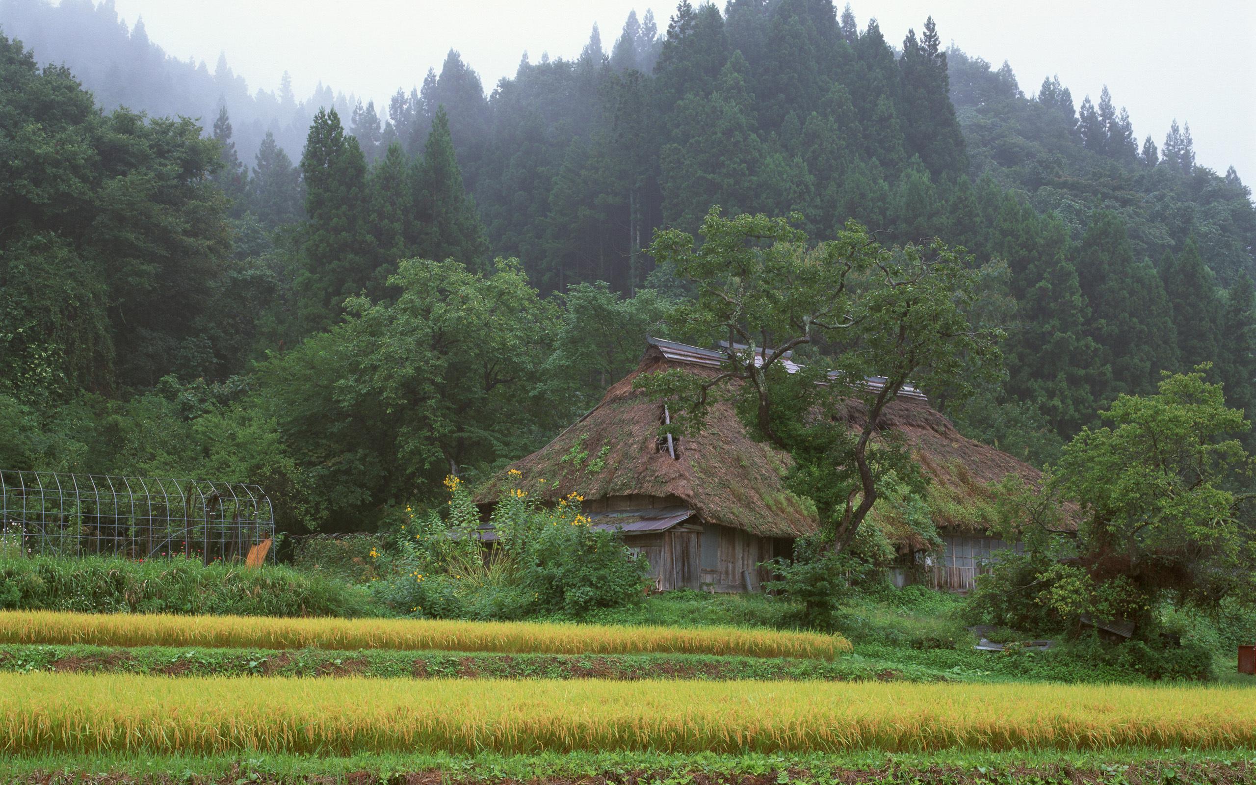 Обои дом в лесу