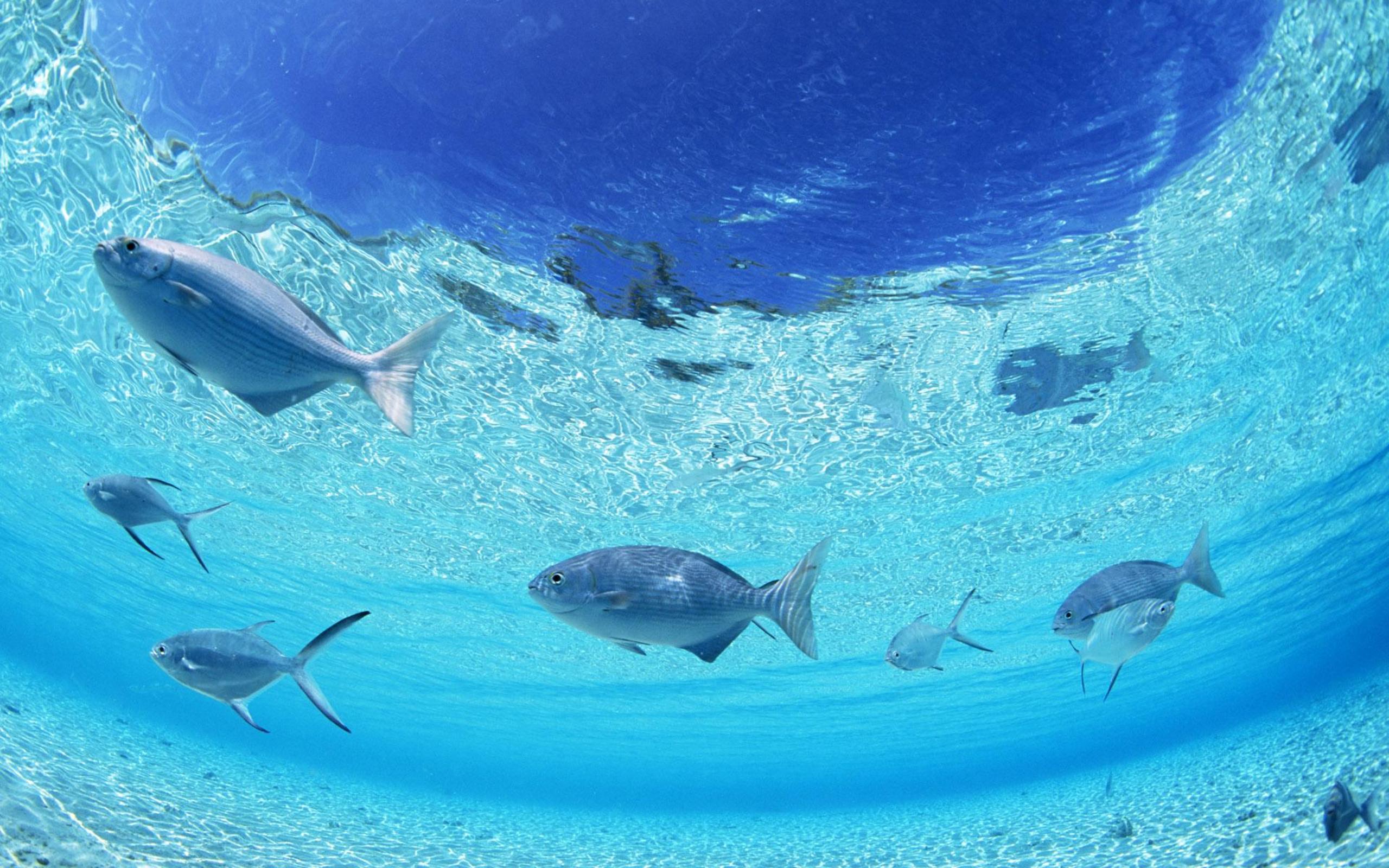 Ocean floor wallpapers and images wallpapers pictures for Ocean s floor