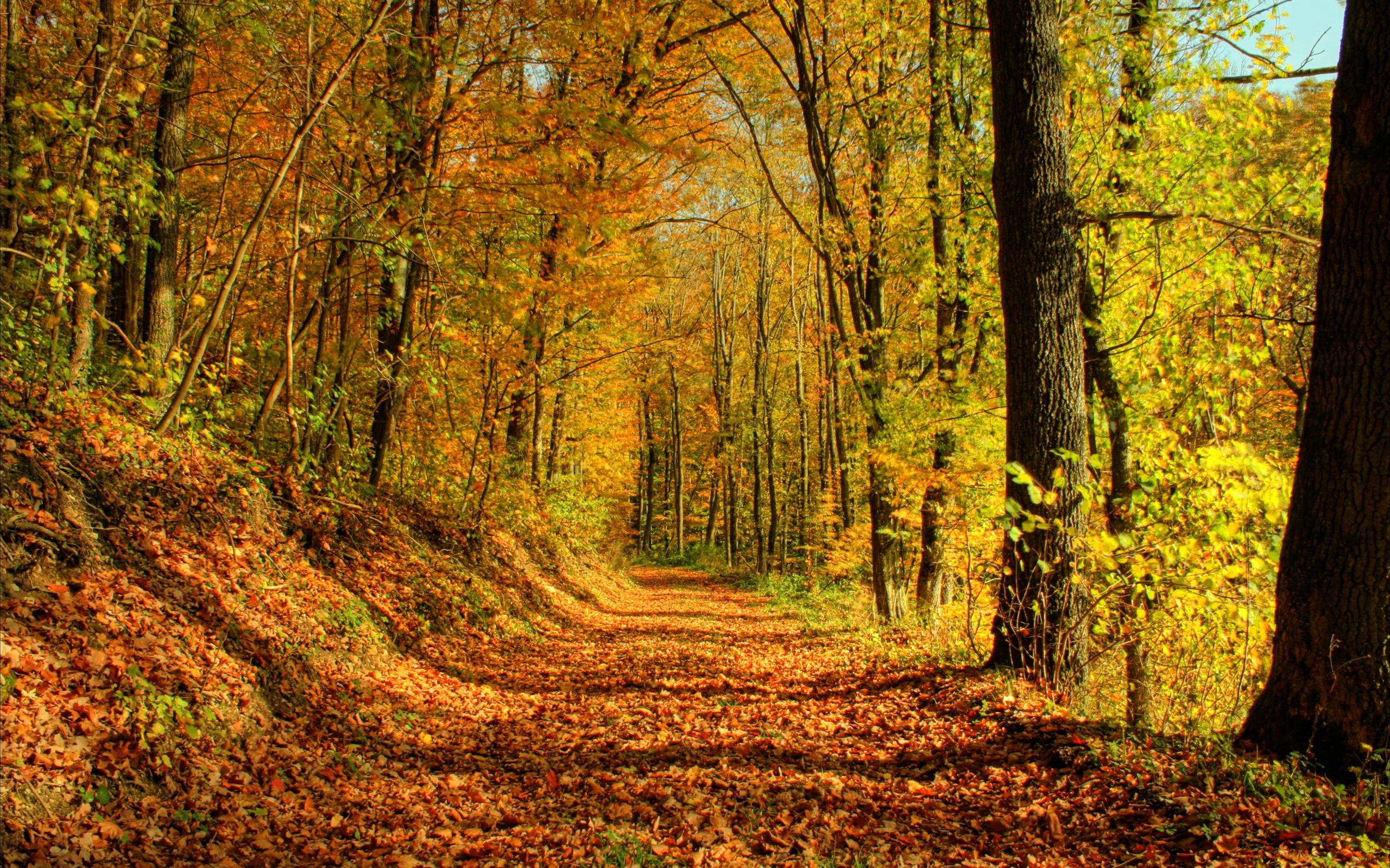 леса осенью картинки