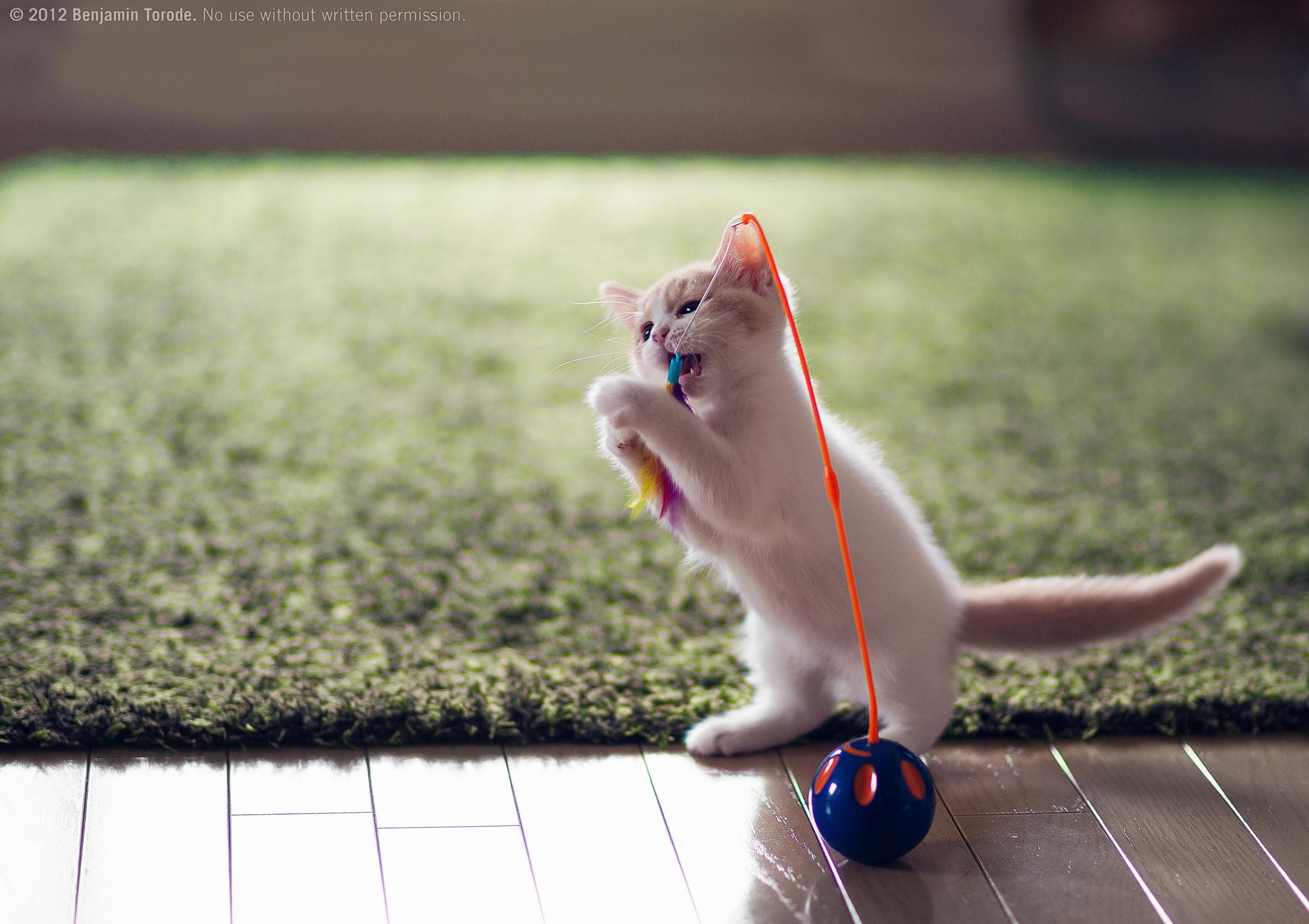самодельная игрушка для котят фото