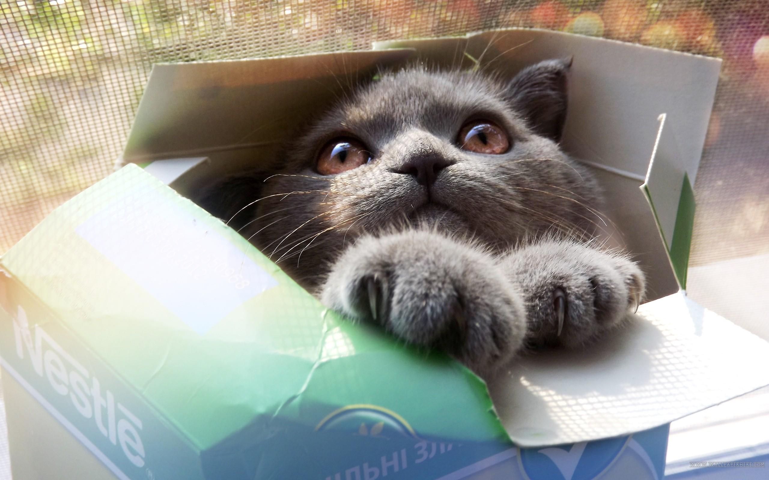 http://www.zastavki.com/pictures/originals/2013/Animals___Cats_Cat_in_a_box_041766_.jpg
