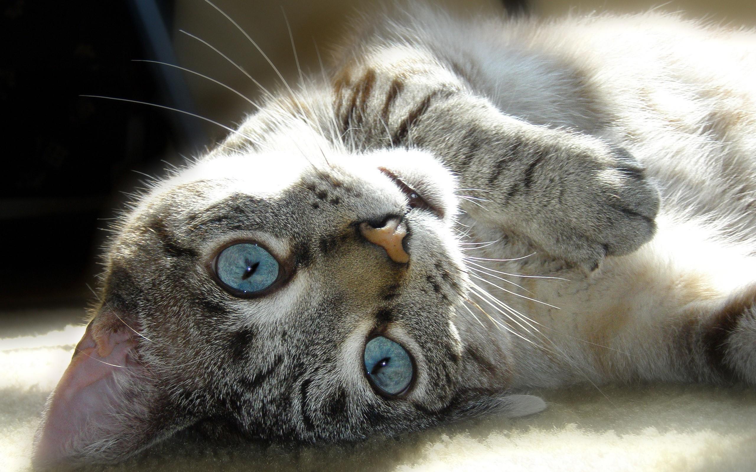 коты с зелеными глазами