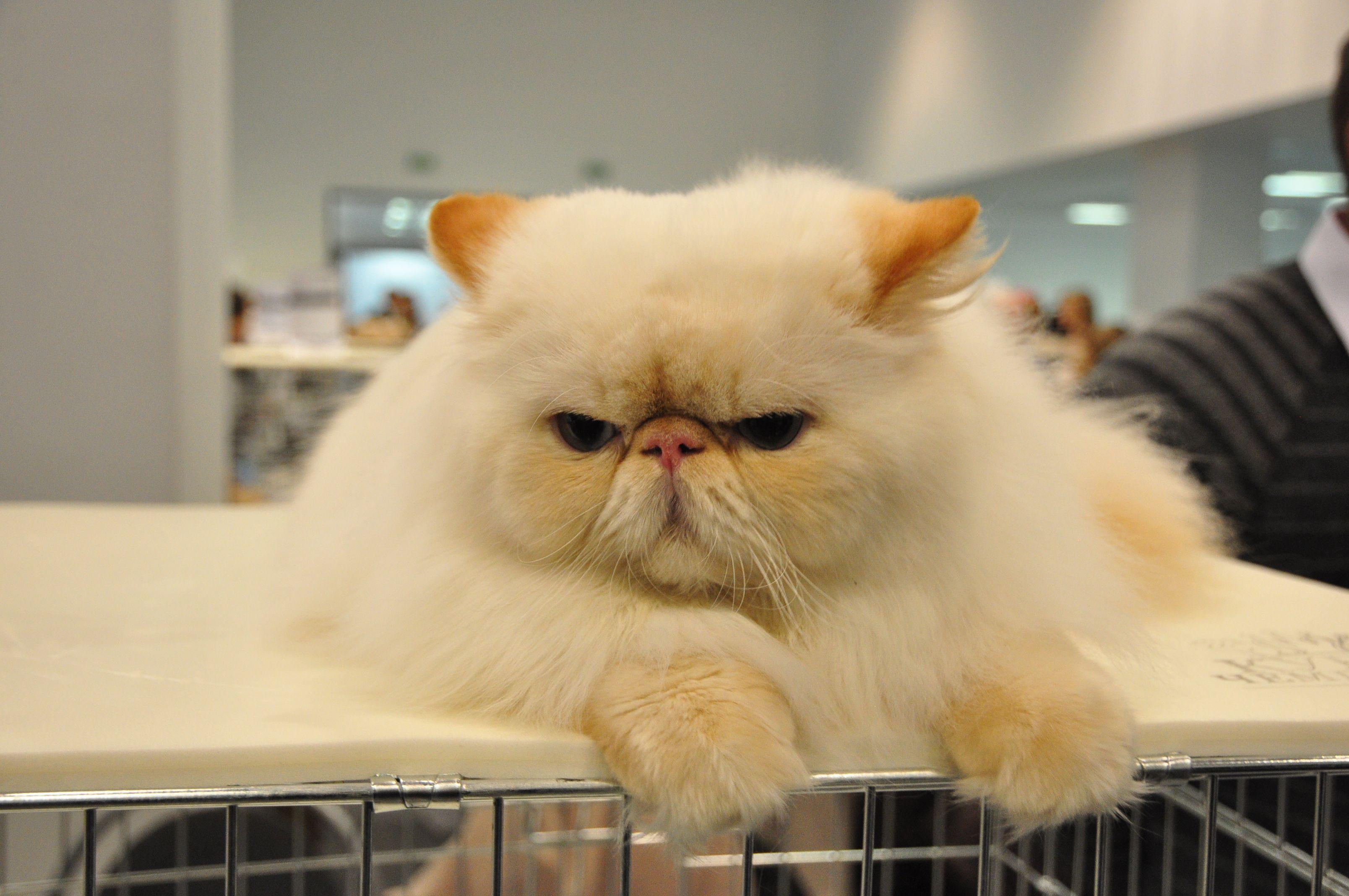 Best 10  Cat wallpaper ideas on Pinterest | Iphone wallpaper cat ...