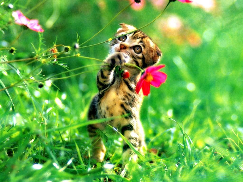 картинки котёнок с цветами