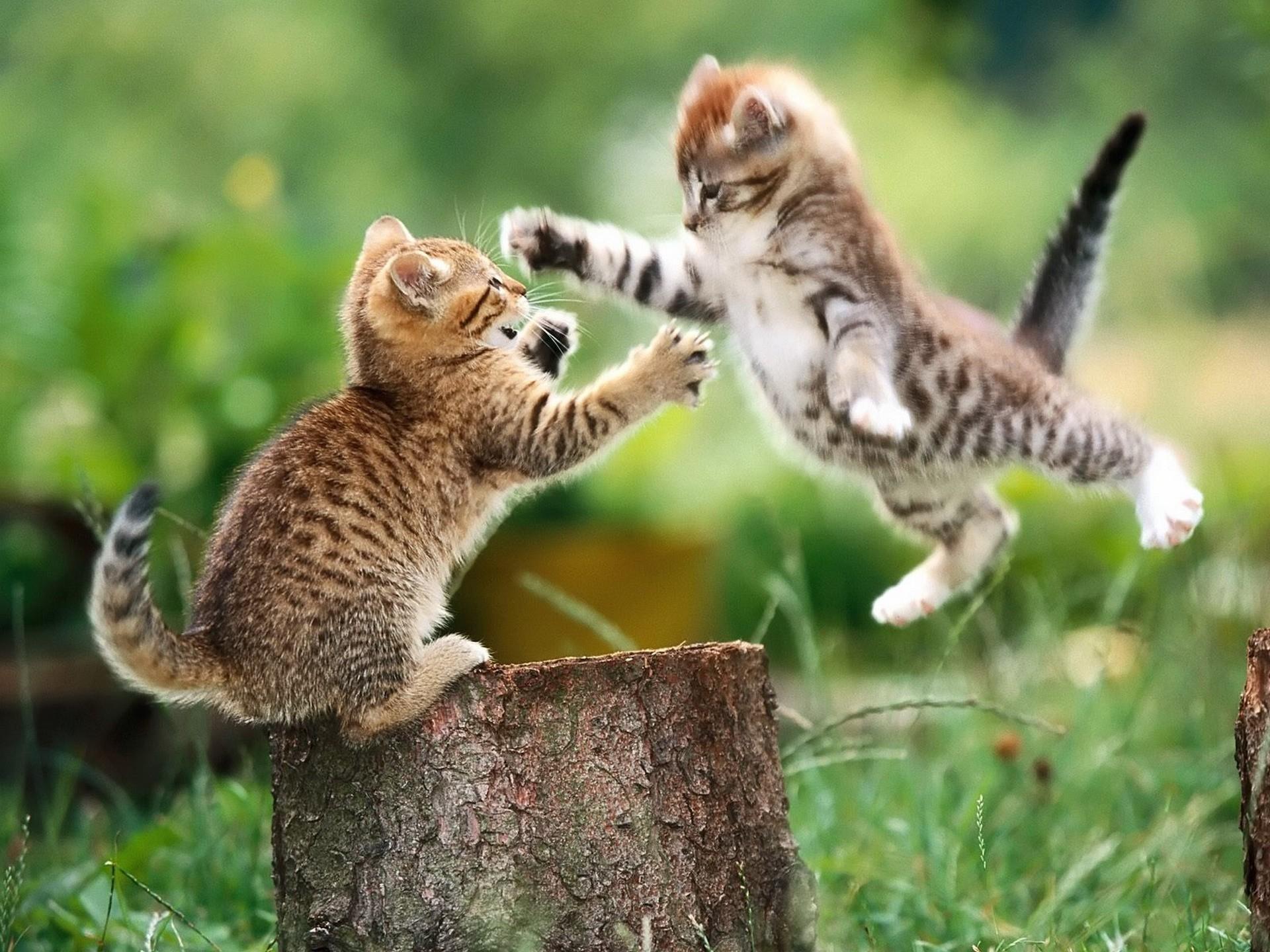 http://www.zastavki.com/pictures/originals/2013/Animals___Cats_Kitty_jump_041981_.jpg