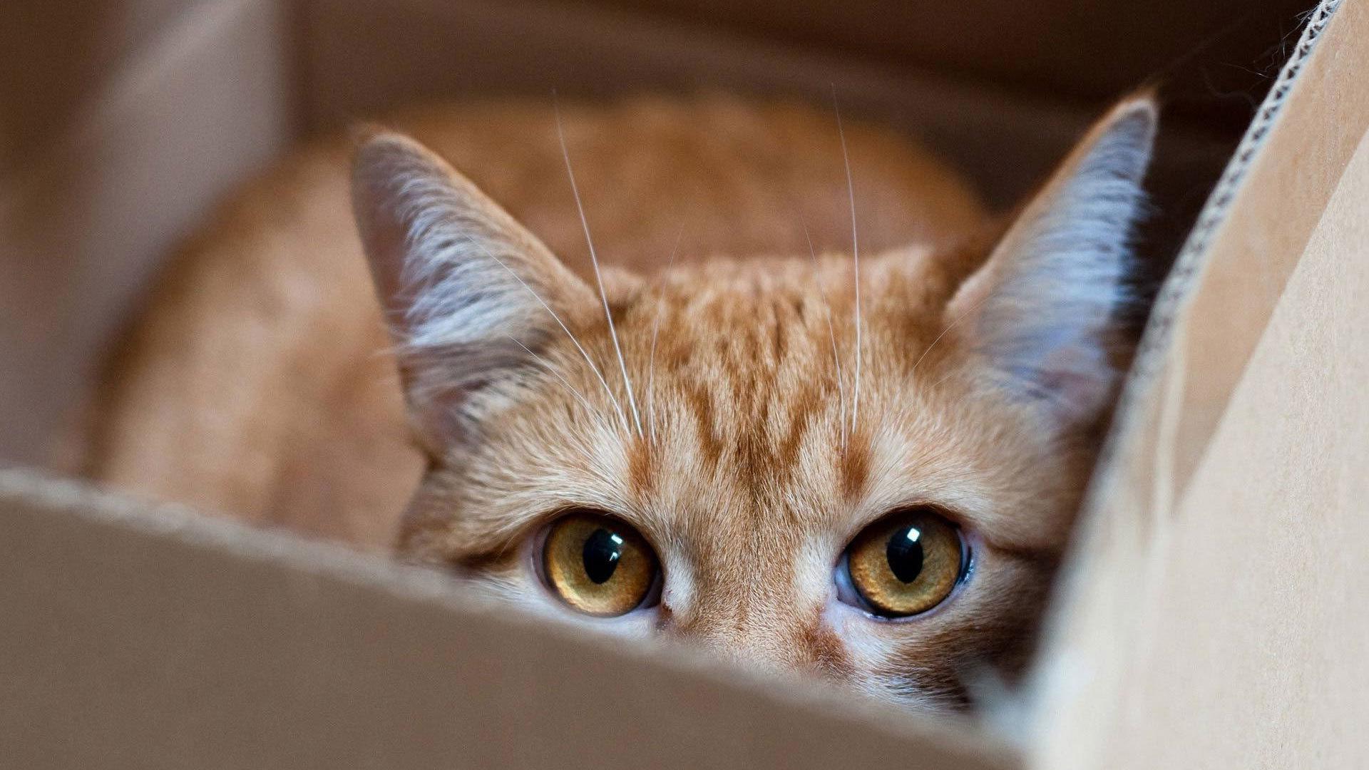 Hide N Seek Boxes Cats