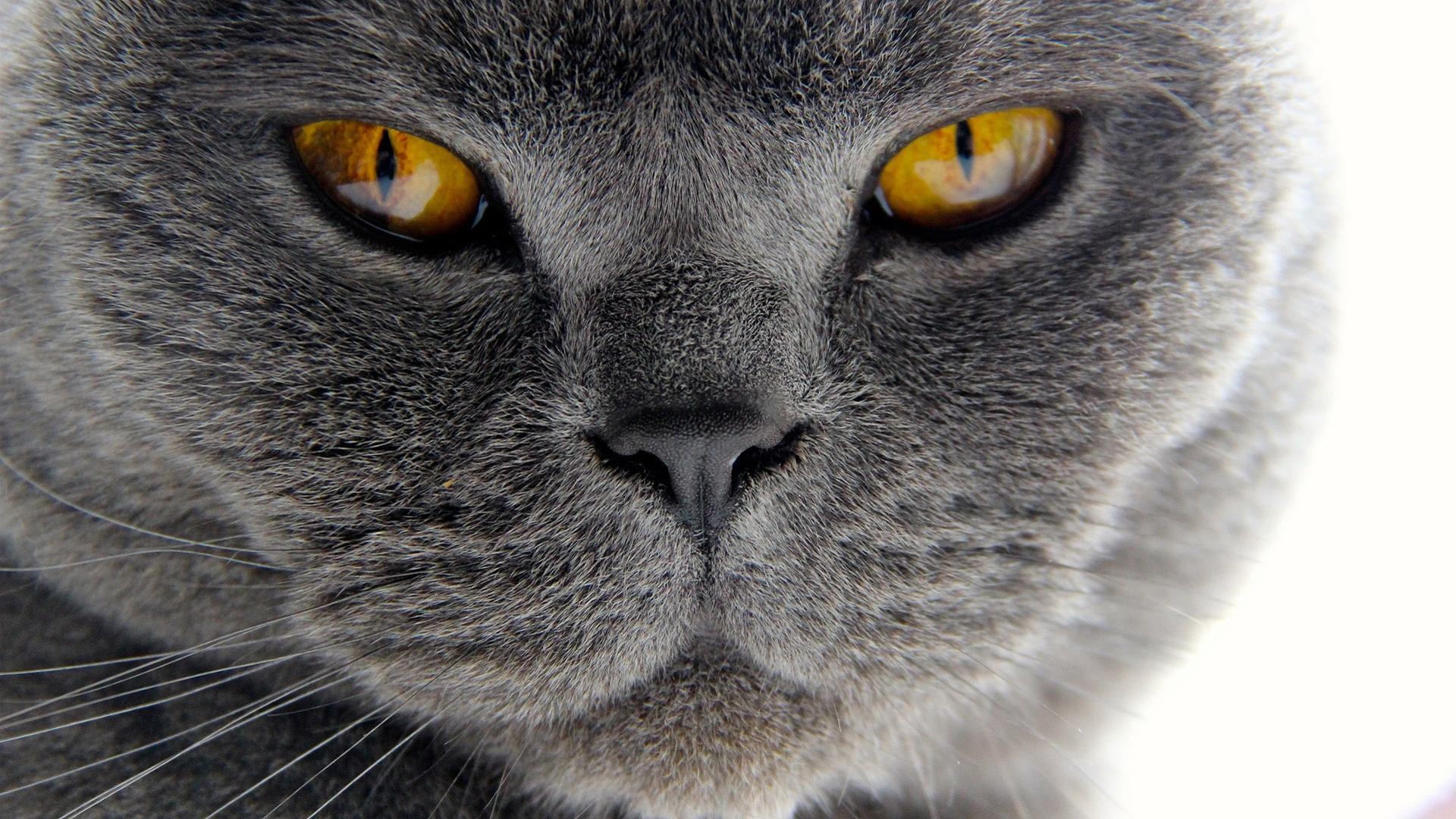 Обои котята 1920x1080 обои картинки фото котят скачать HD