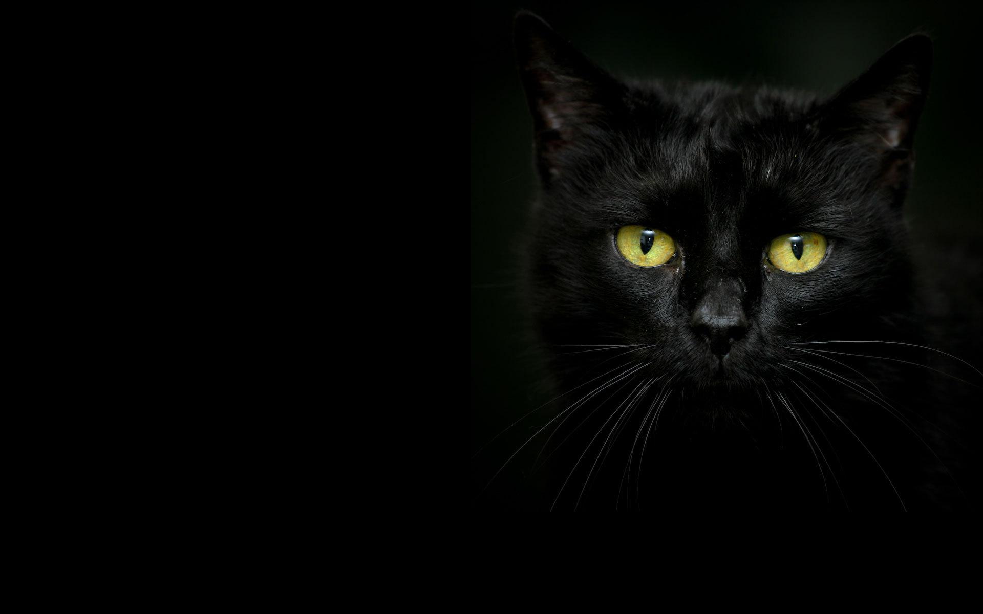 25  best Beautiful cats ideas on Pinterest