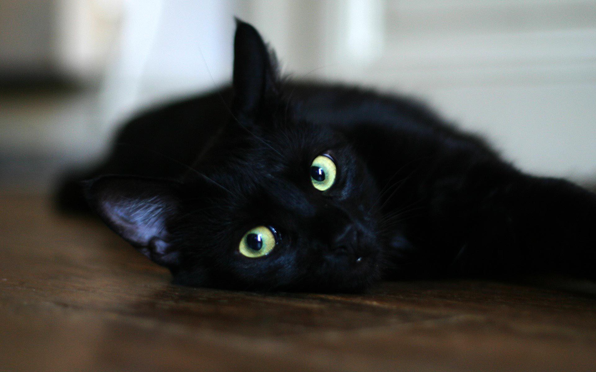 http://www.zastavki.com/pictures/originals/2013/Animals___Cats__Black_cat_resting_on_the_floor_044880_.jpg