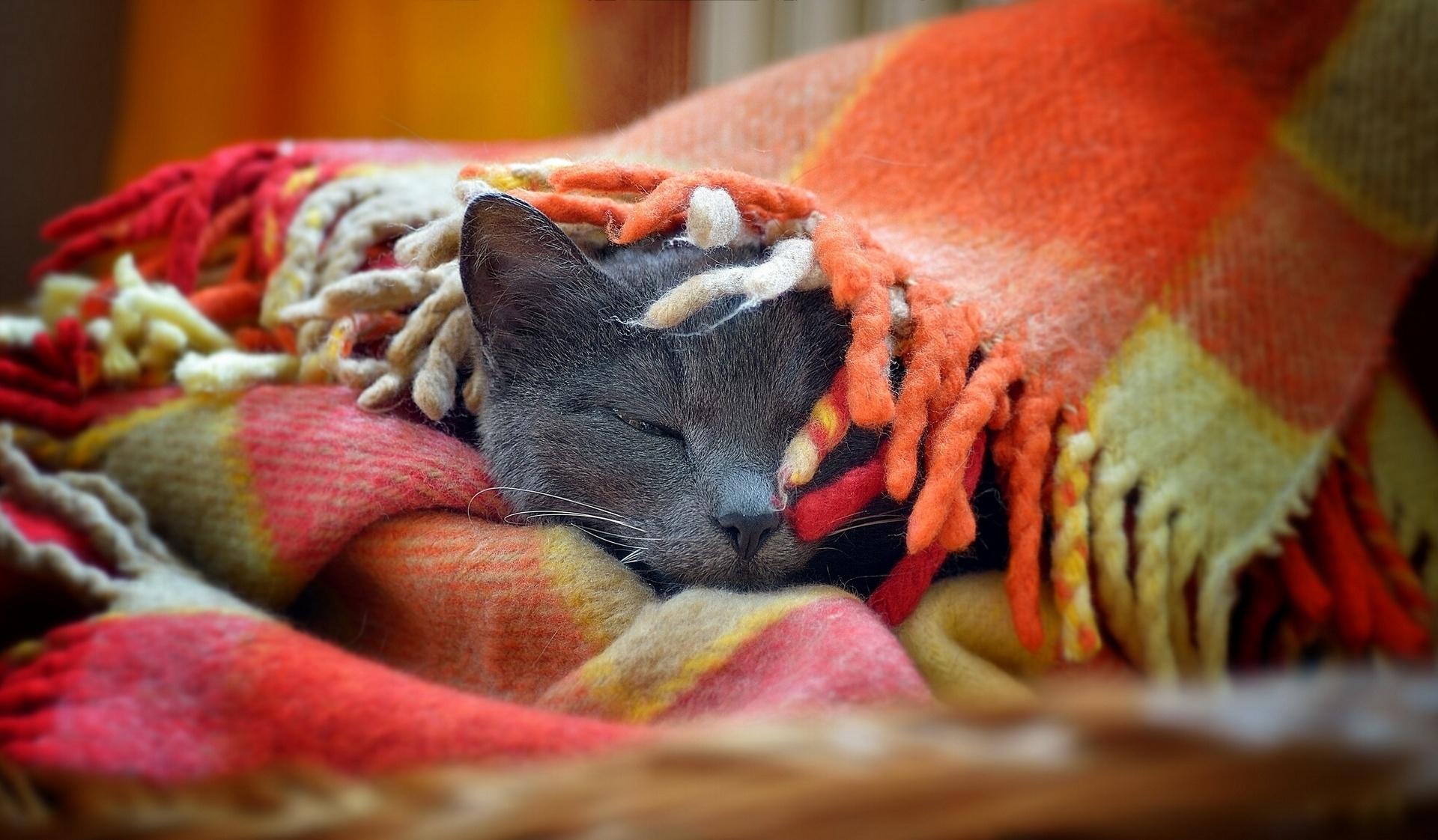 http://www.zastavki.com/pictures/originals/2013/Animals___Cats__Gray_cat_basks_in_the_bedspread_046749_.jpg