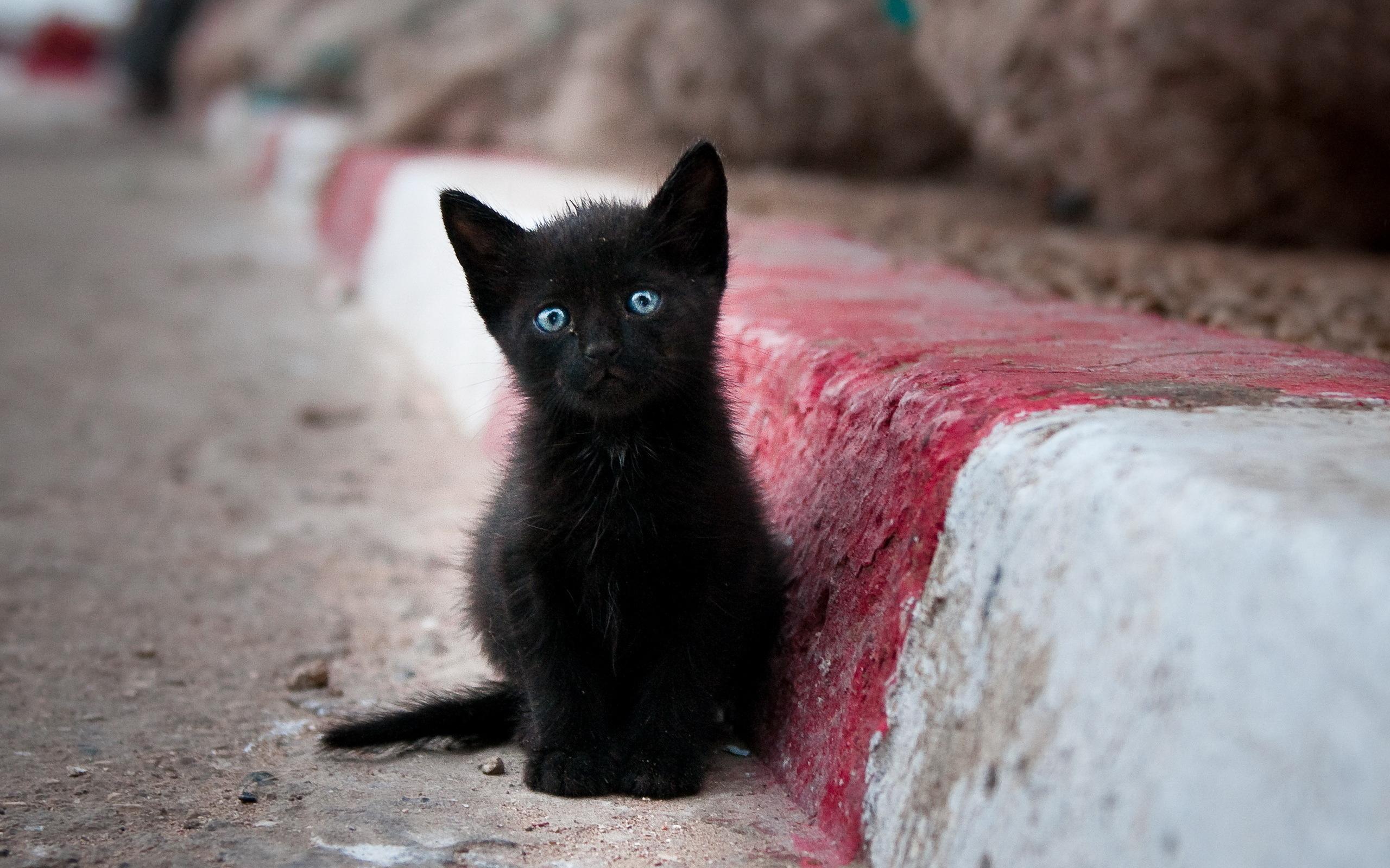 Коты черные маленькие