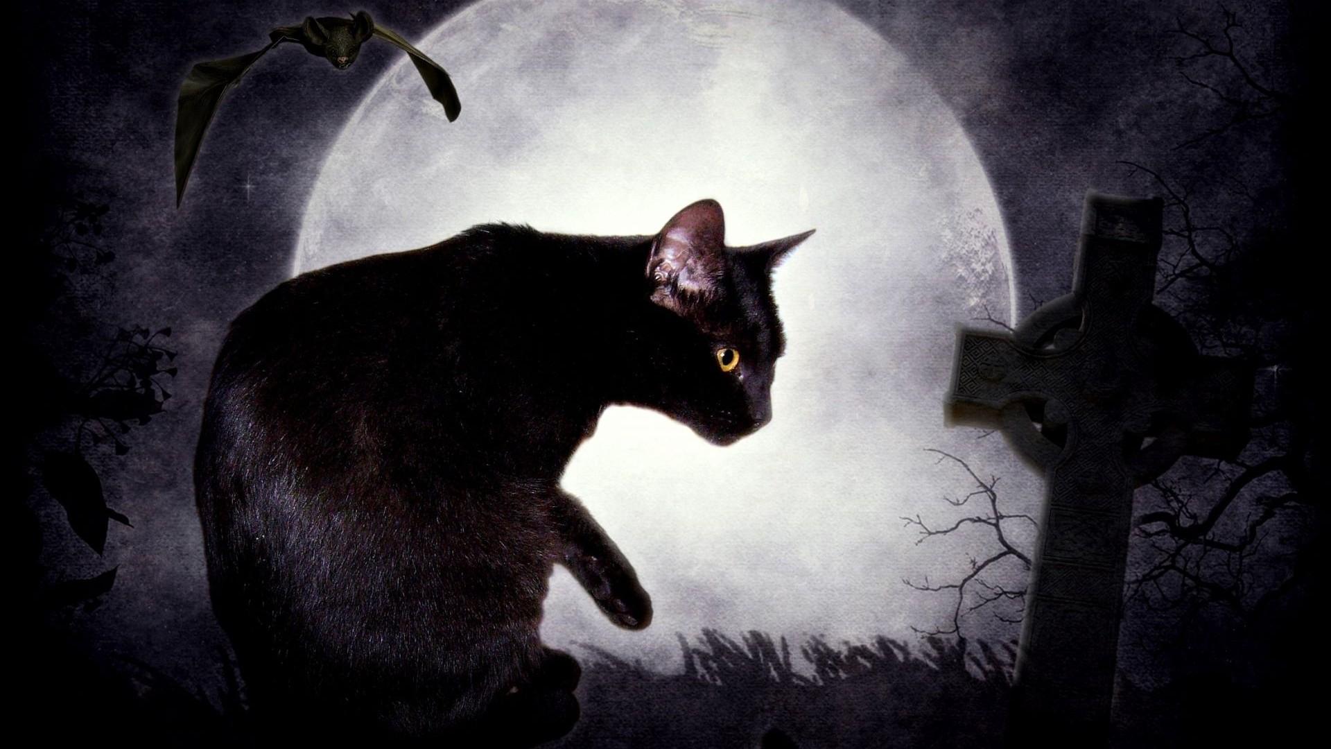 Картинки черная кошка аниме