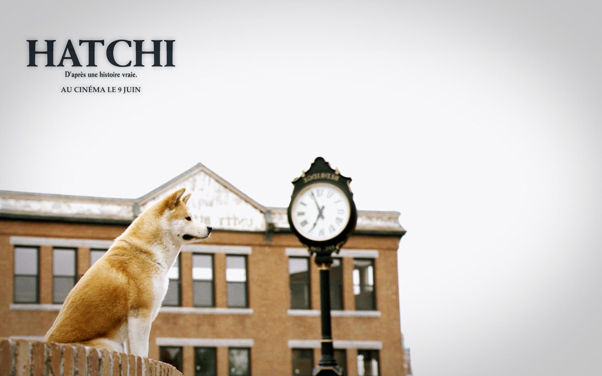Hachiko Dog Movie Free Download