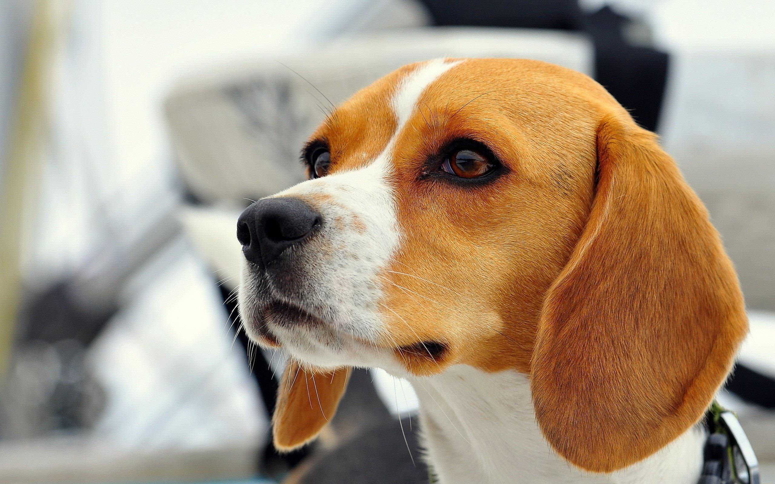Small Toy Dog Breeds Pics Of Dog Breeds Police Dog Breeds Dog Breeds ...