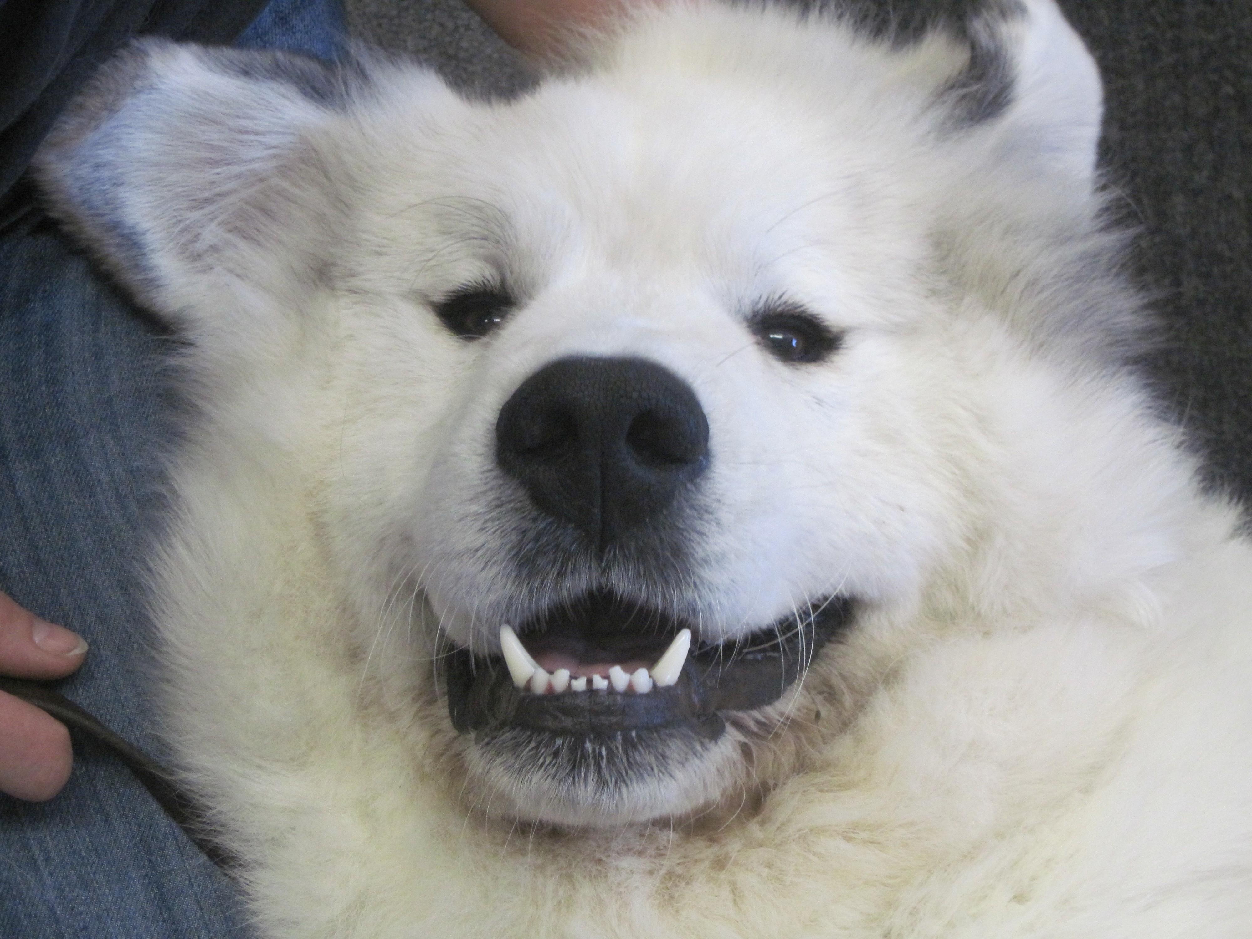 Pyrenees Dog Names Great White Pyrenees Dog