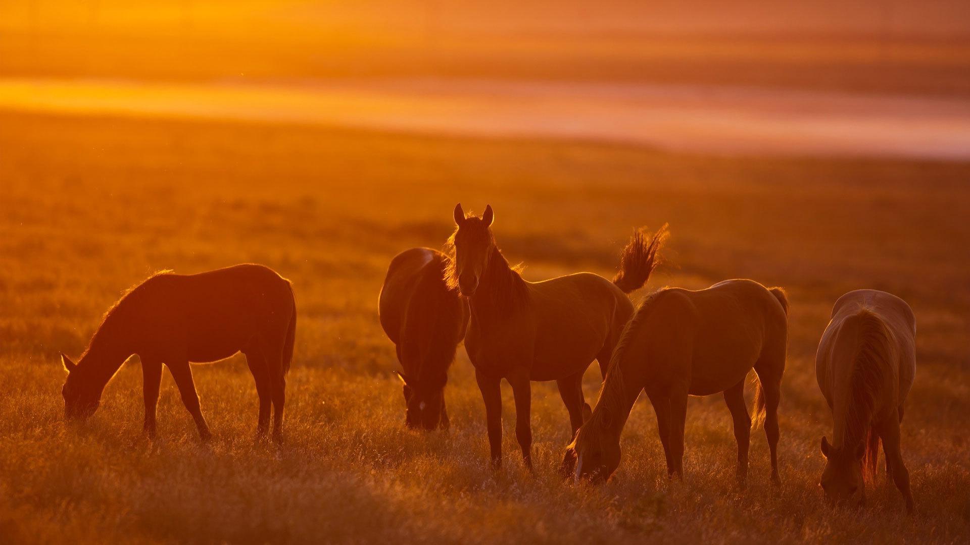 Horse sunset wallpaper