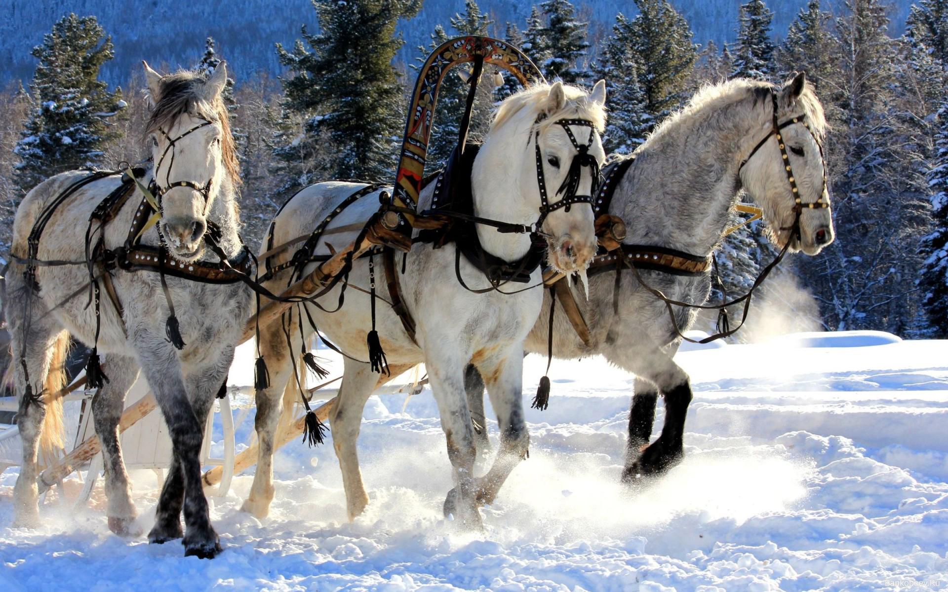 christmas sleigh horses 1920x1080 wallpaper - photo #1
