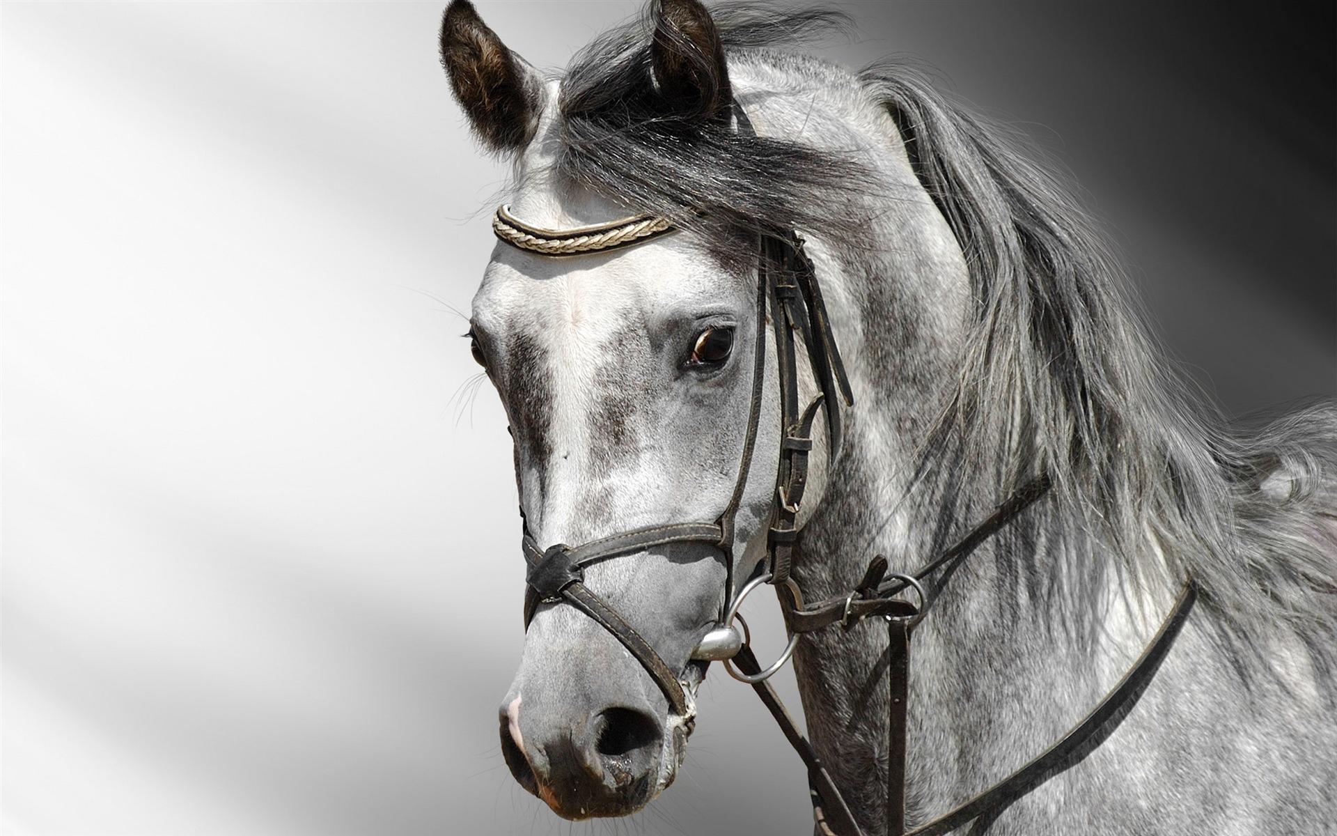 Horse herd wallpapers