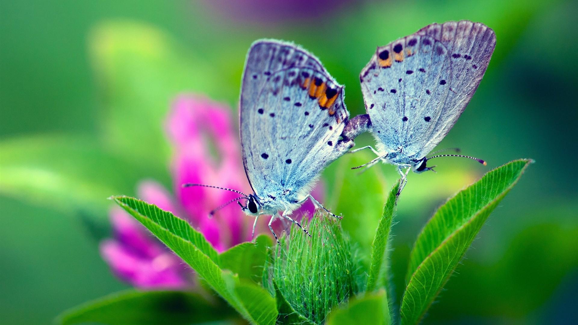 Pair with Butterflies iGBolFX