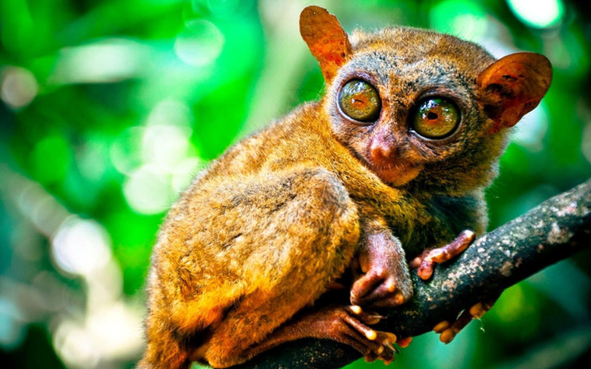 Malaysia Rainforest Animals