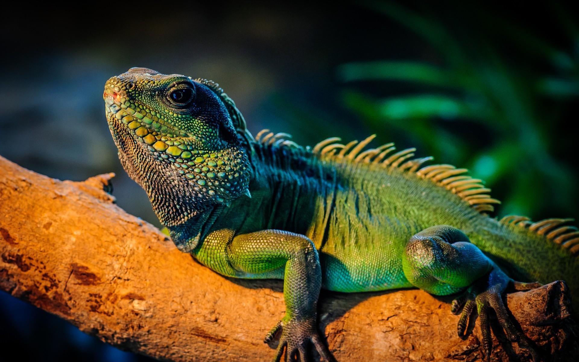 H D Reptiles Mundo reptil 55 imagen...