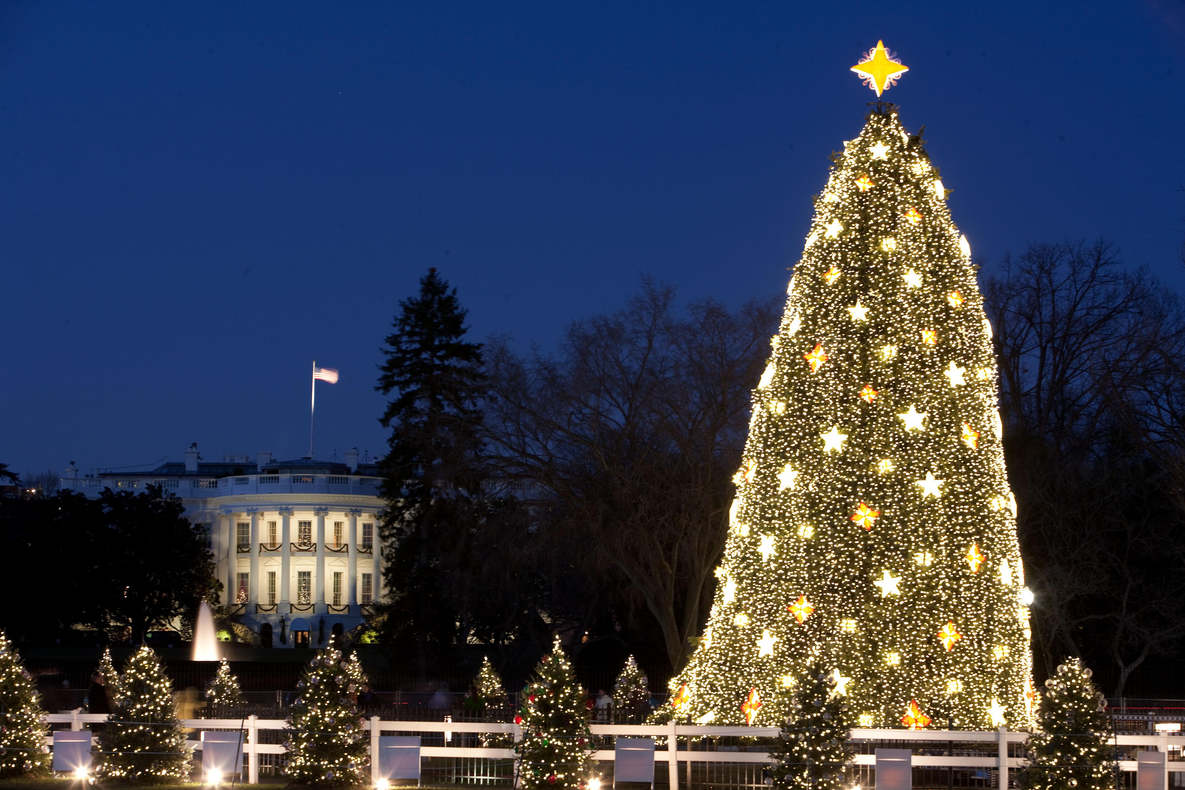 картинки самые красивые елки на новый год салон