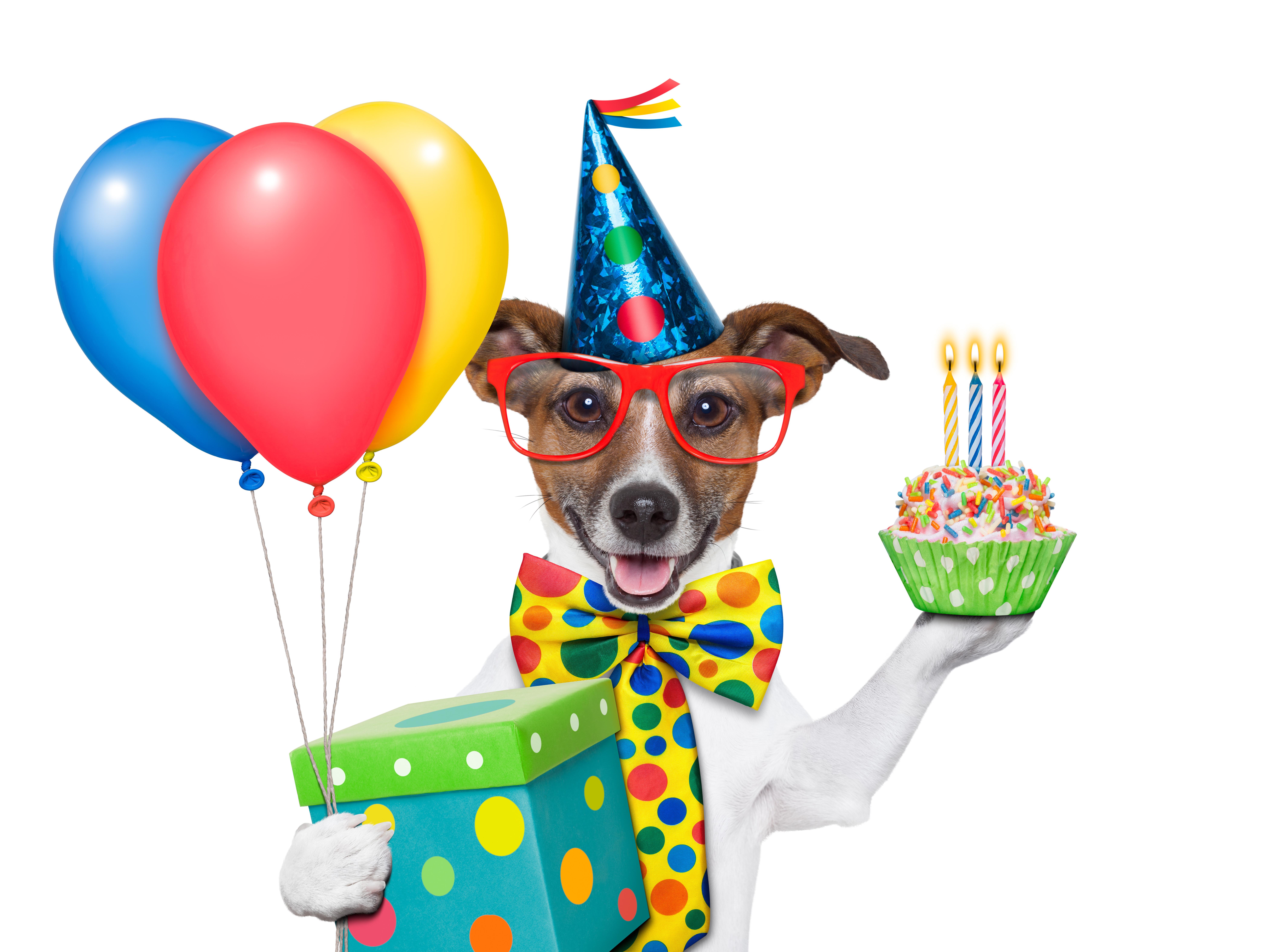 Cheerful dog on birthday
