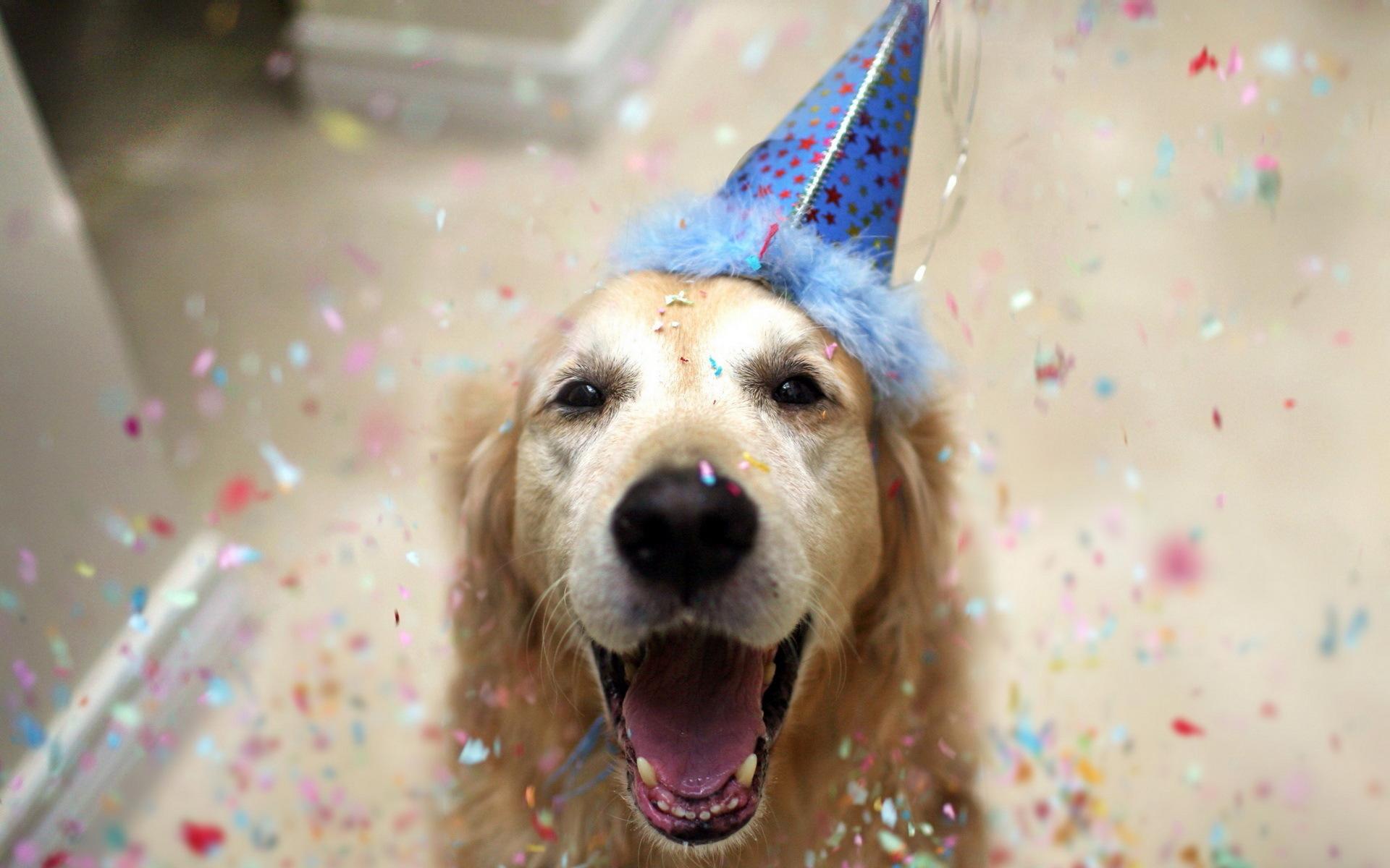 Картинки с собачками с днем рождения смешные