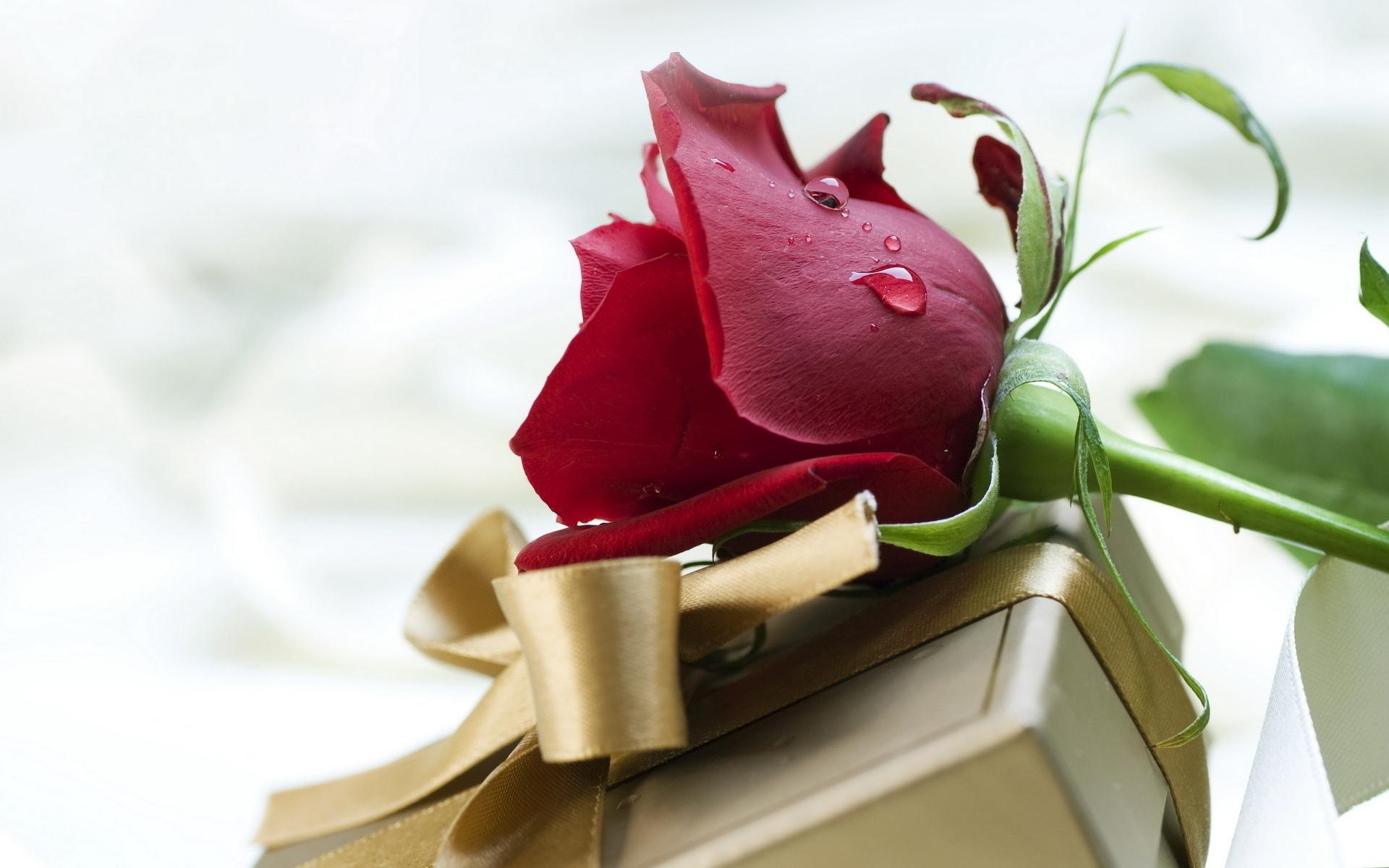 Днем, розы открытки с днем рождения мужчине