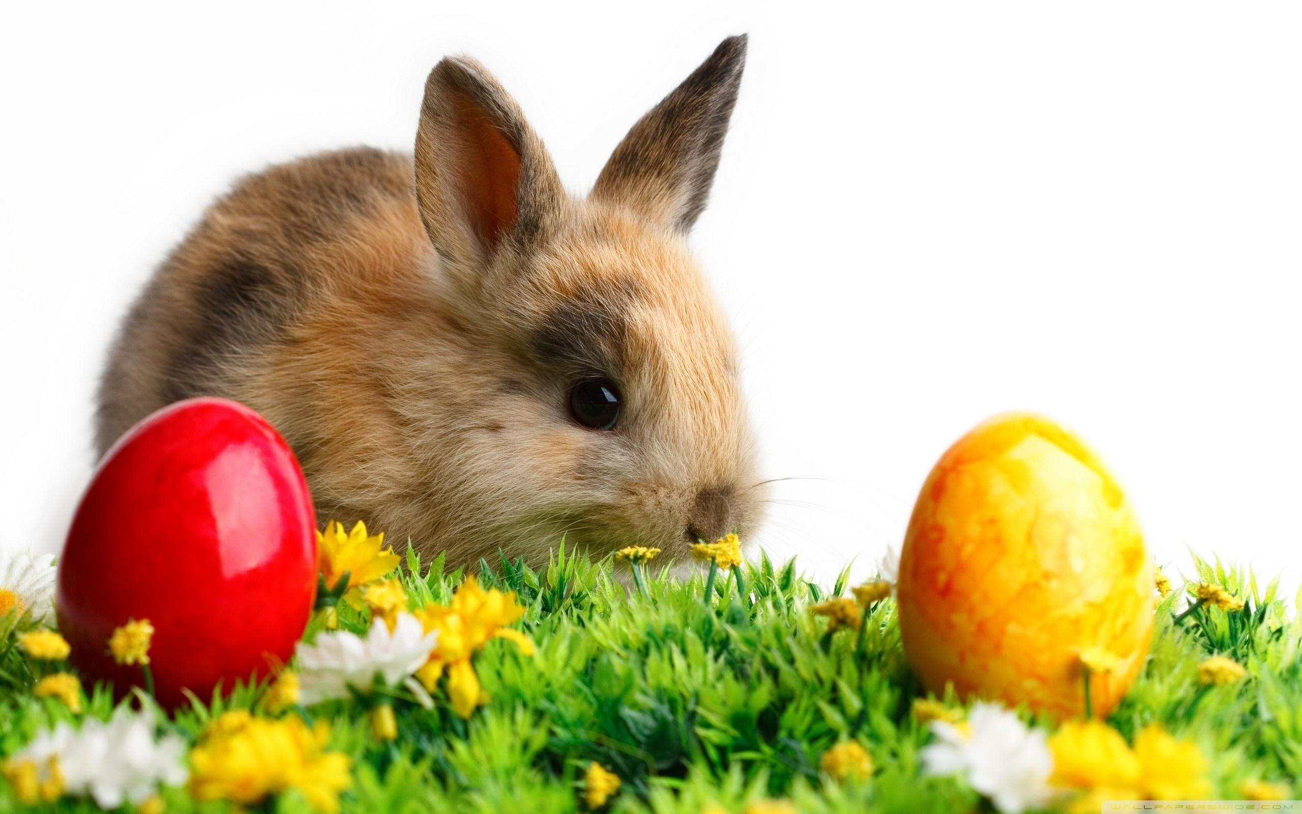 http://www.zastavki.com/pictures/originals/2013/Holidays___Easter__037867_.jpg