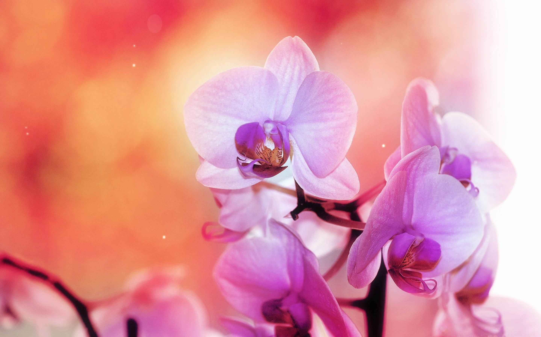 картинки для широкоформатной печати орхидея ребенок очень