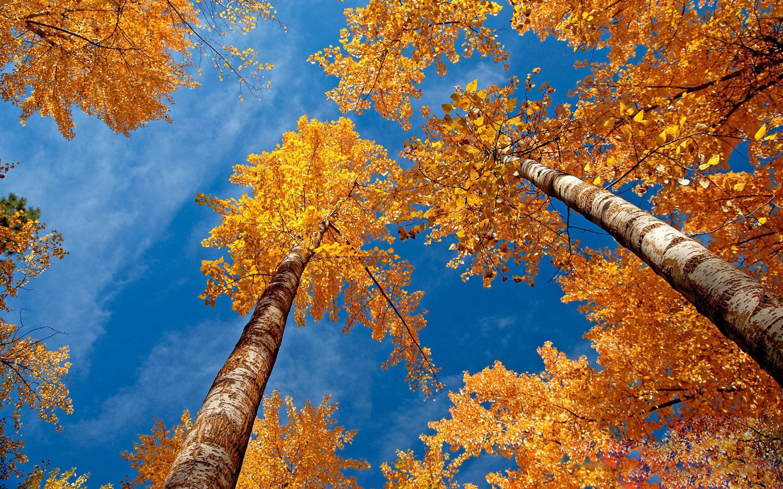 все картинки золотая осень столько информационного шума
