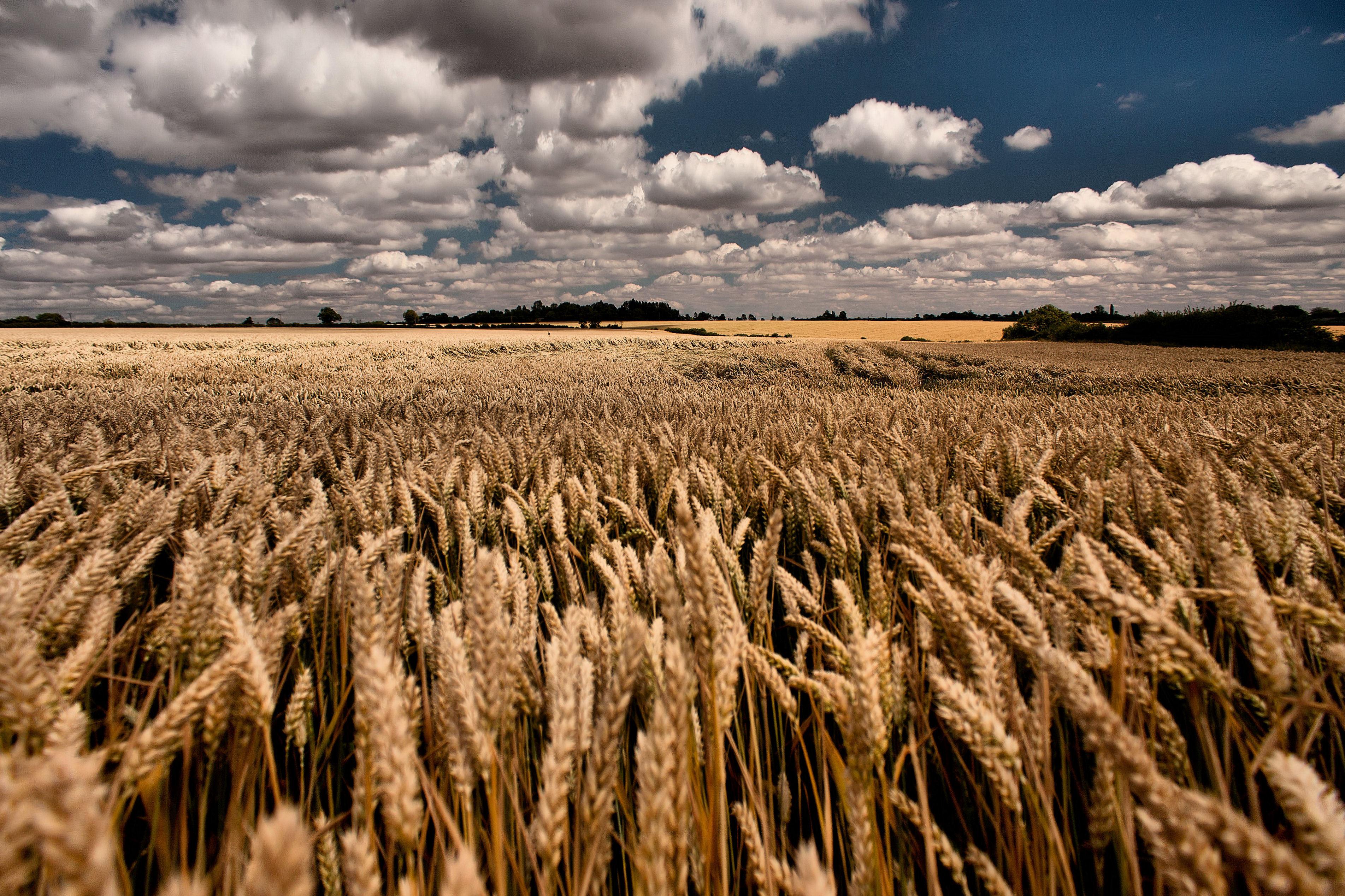 Сельское хозяйство картинки на рабочий стол