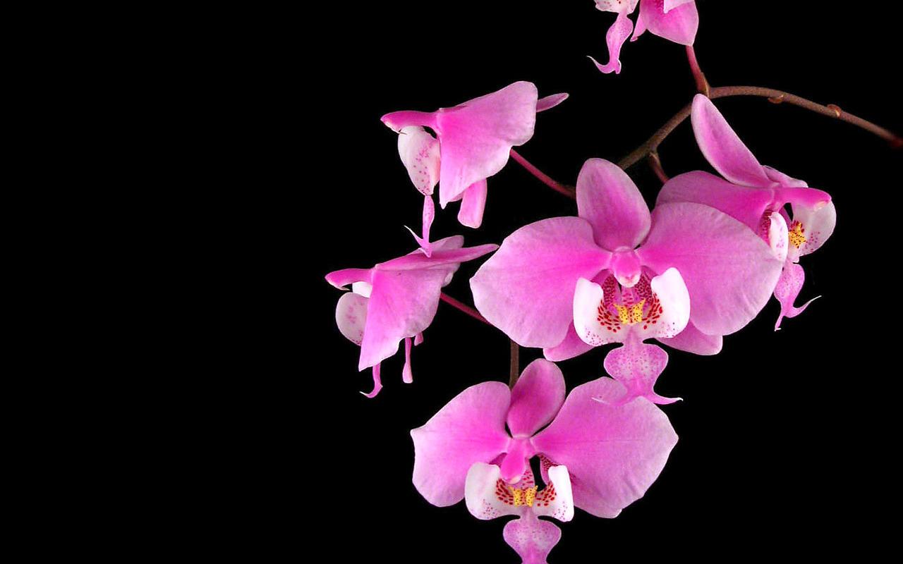 приглядеться, можно картинки орхидей в хорошем качестве черные территории бывшей