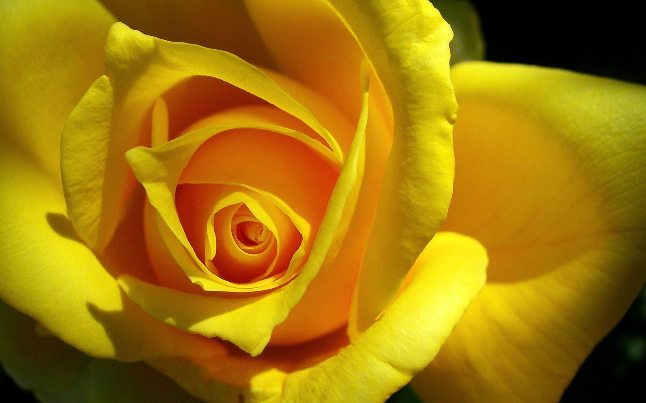 Картинки красивые желтые цветы, днем