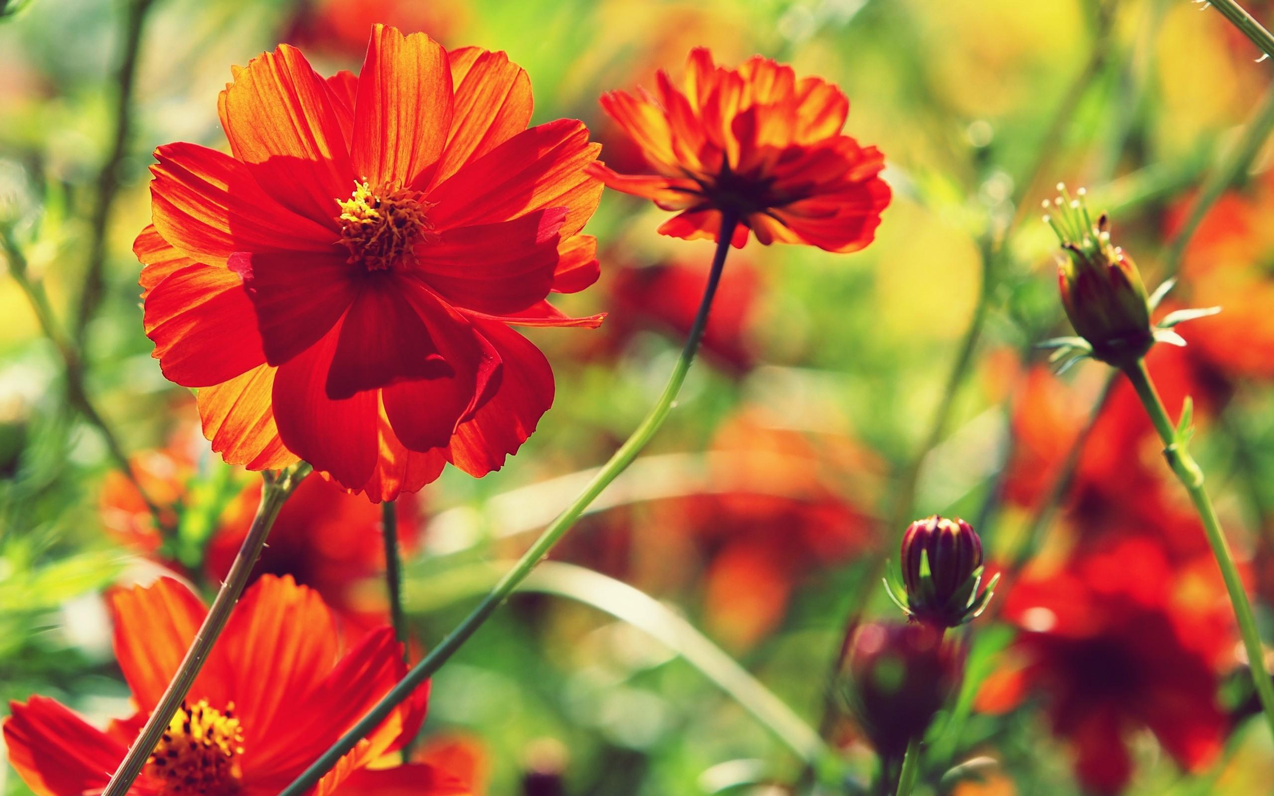 Красные цветы рисунок фото