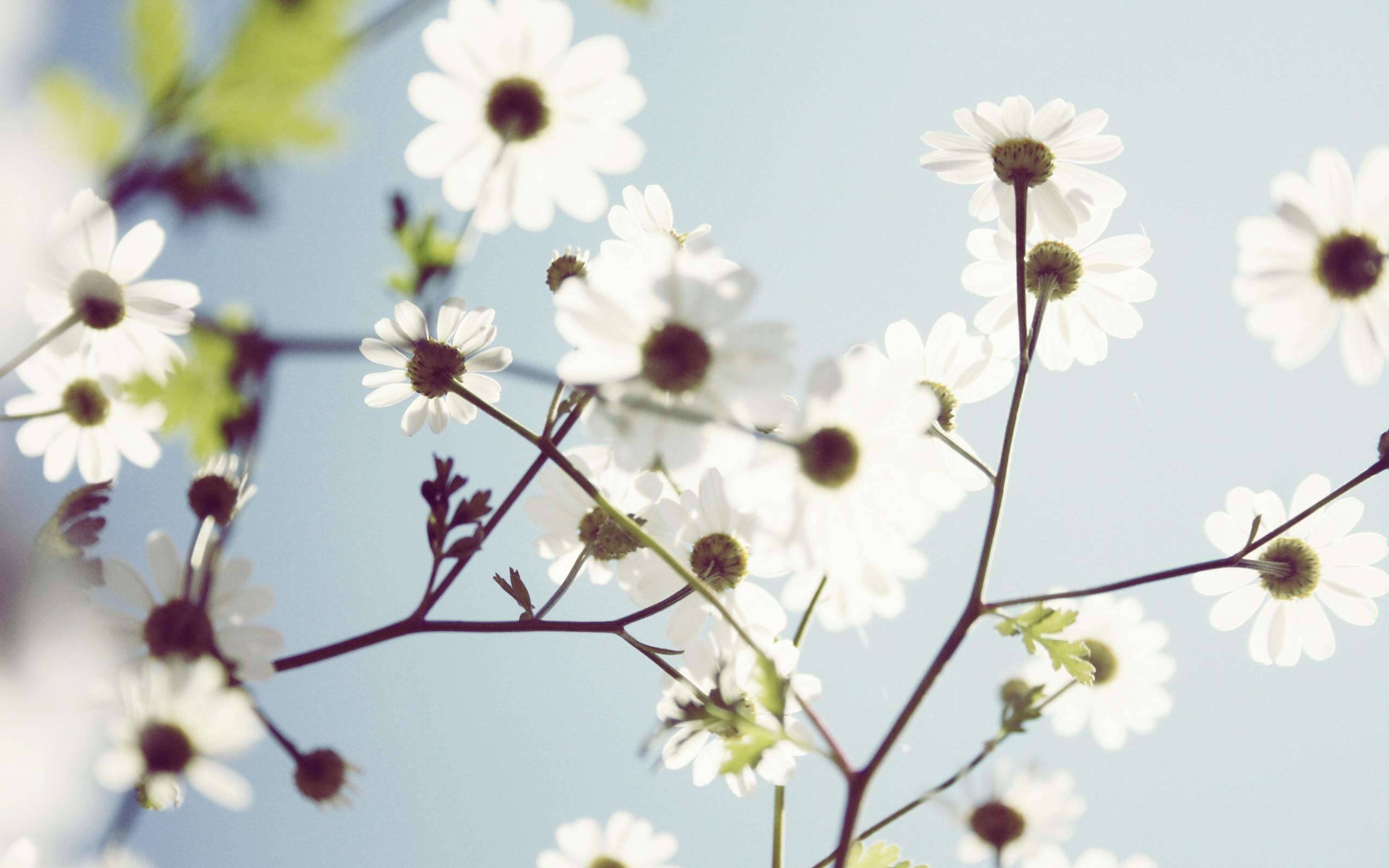 Spring whit foto
