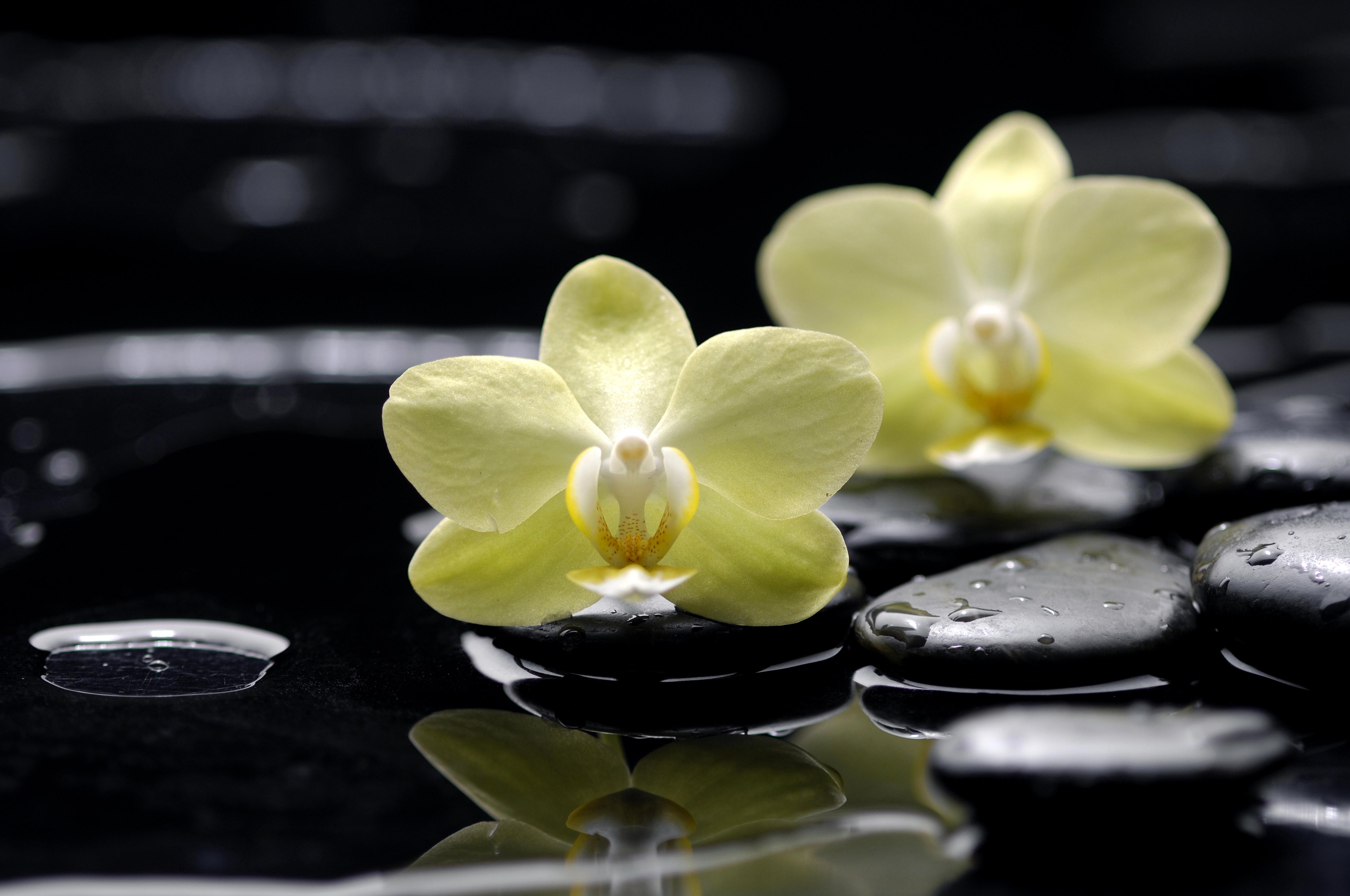 Фото желтой ламборджини сбоку в высоком разрешении идея панорамного