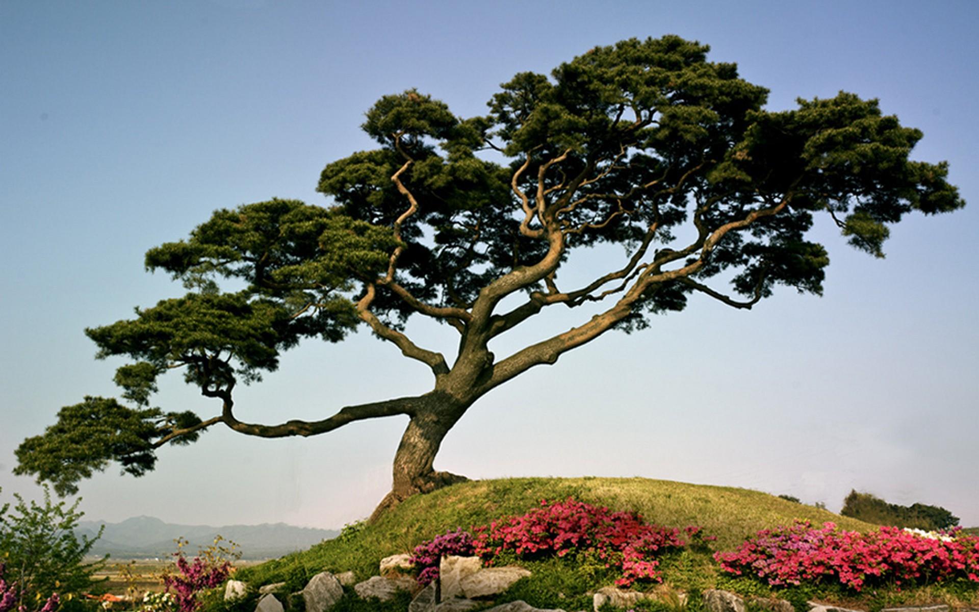 группу извилистое дерево фото постарались