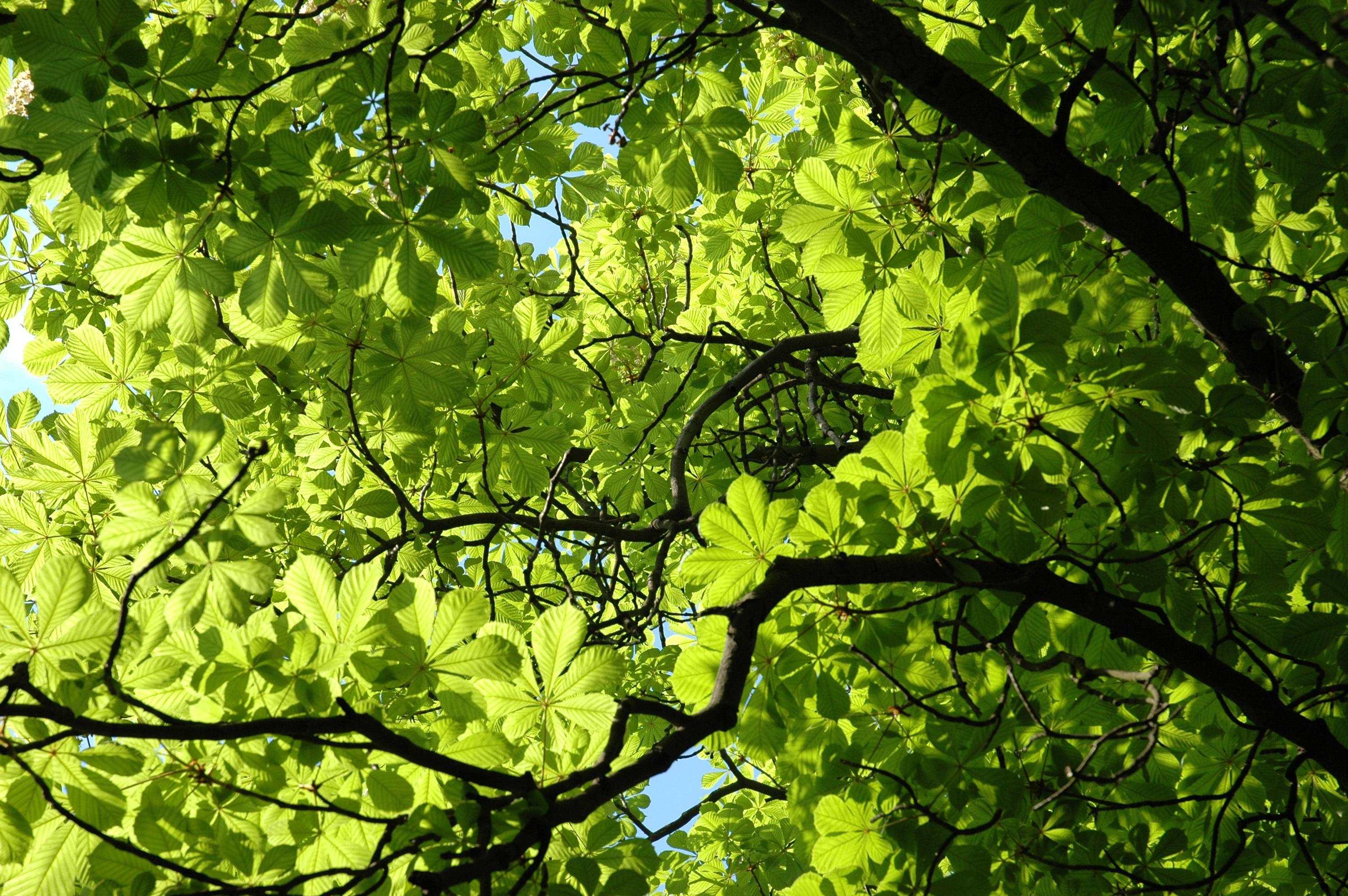Листва деревьев картинки
