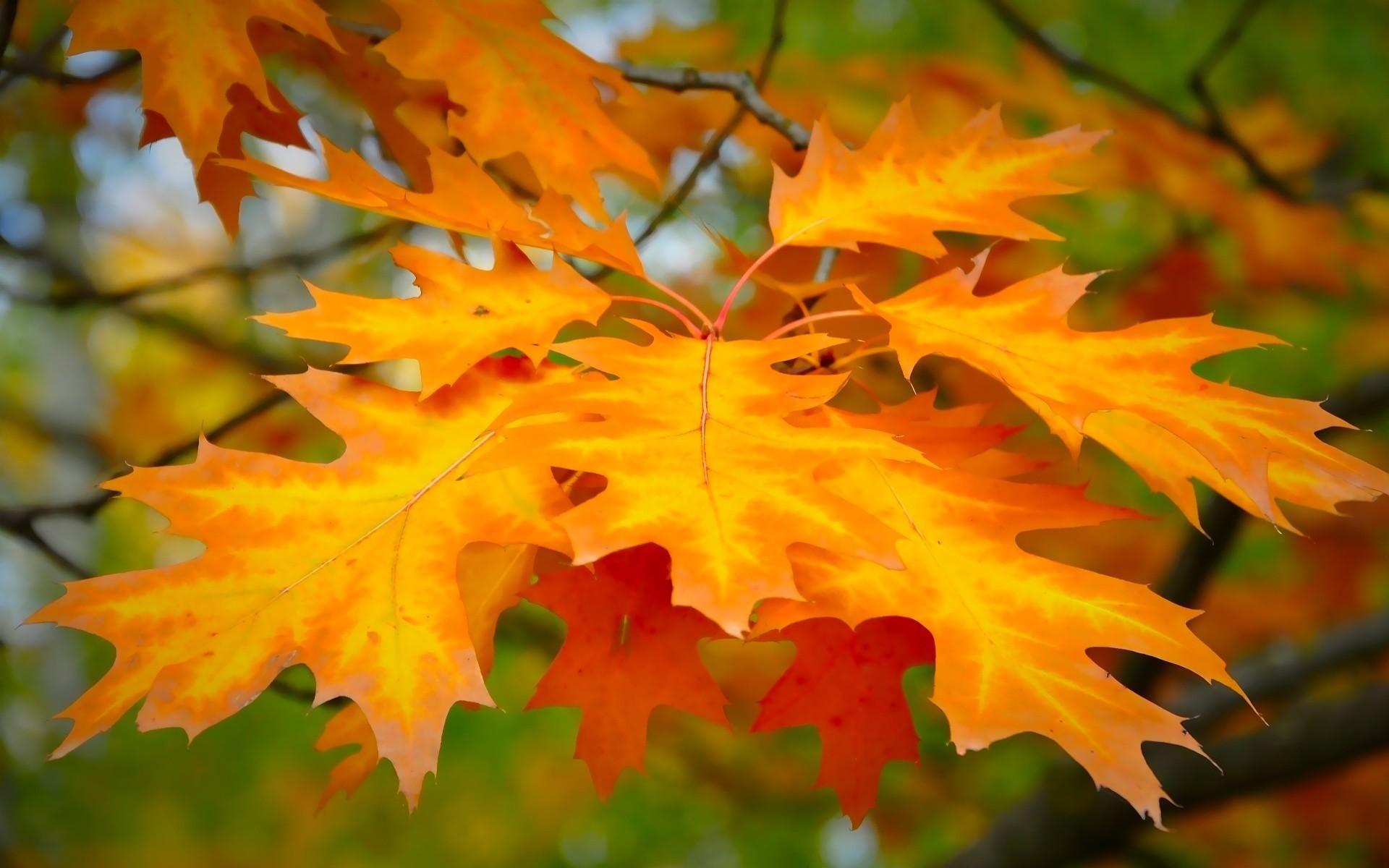 Легкие открытка, осенние листья в открытках