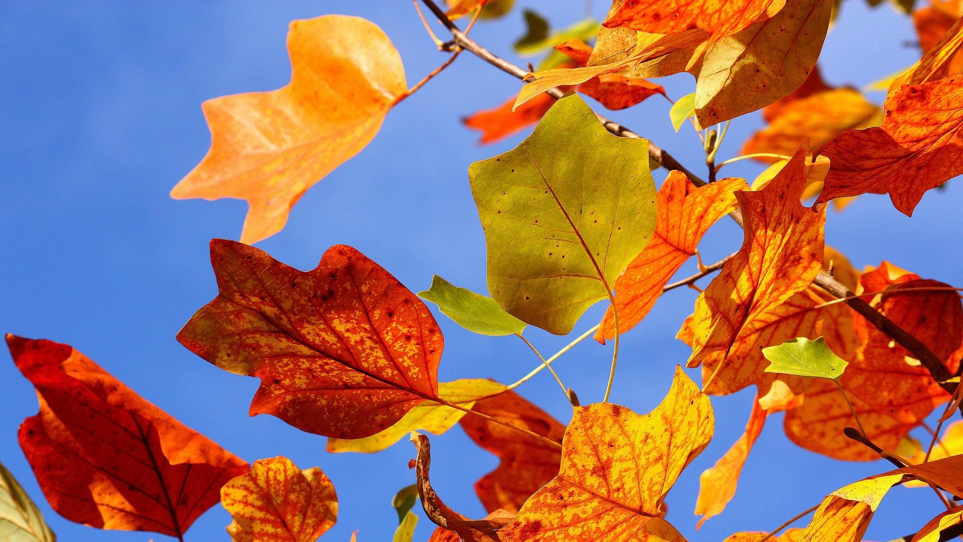 Обои на рабочий стол широкоформатные осенние листья