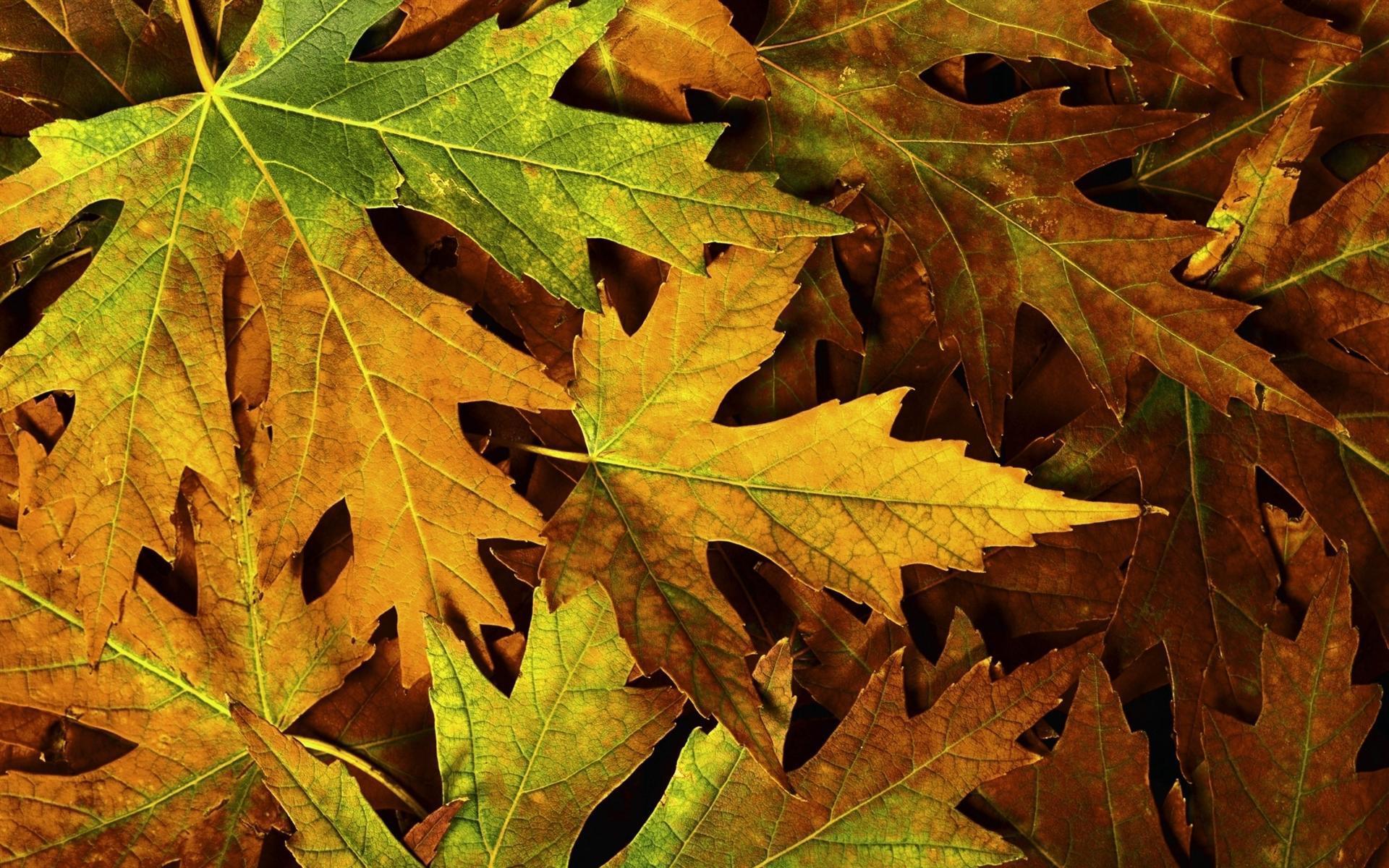 самых необычных смотреть картинки осеннего листа одном