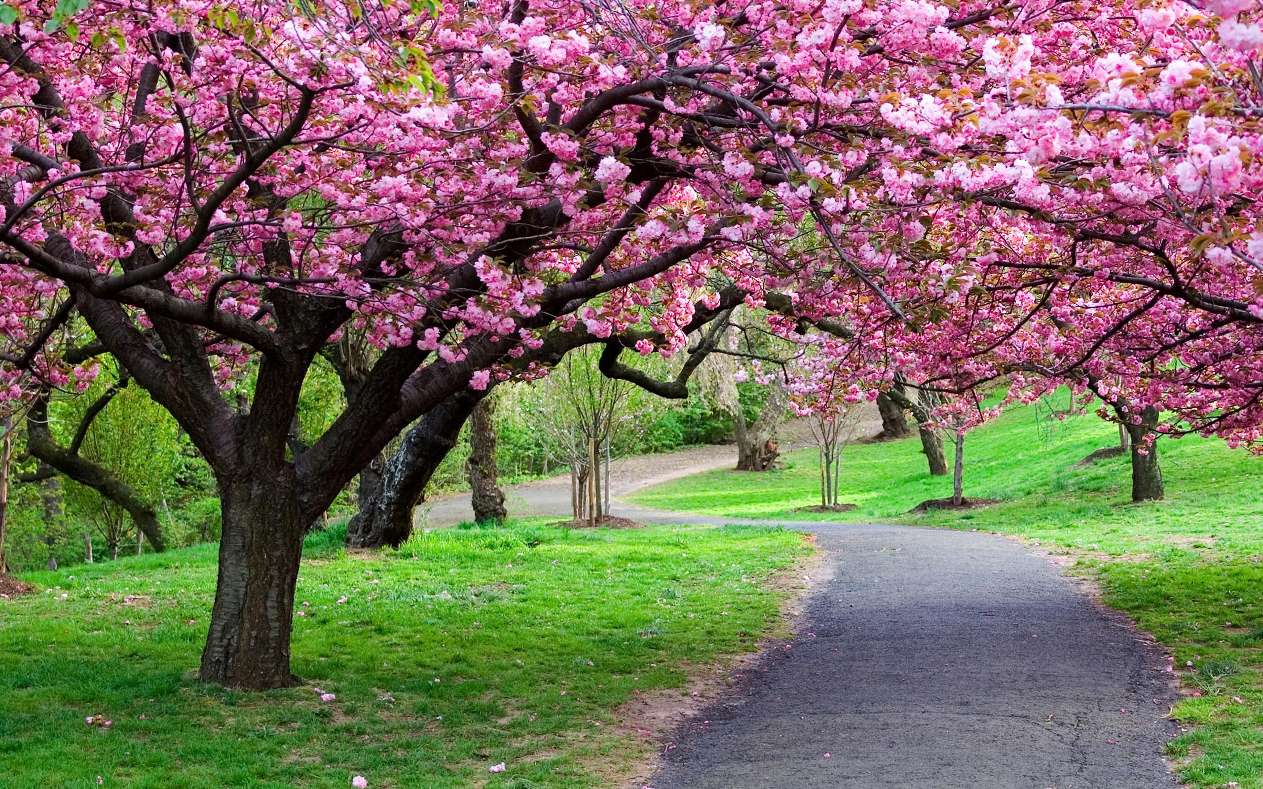 Nature___Seasons___Spring__038259_.jpg