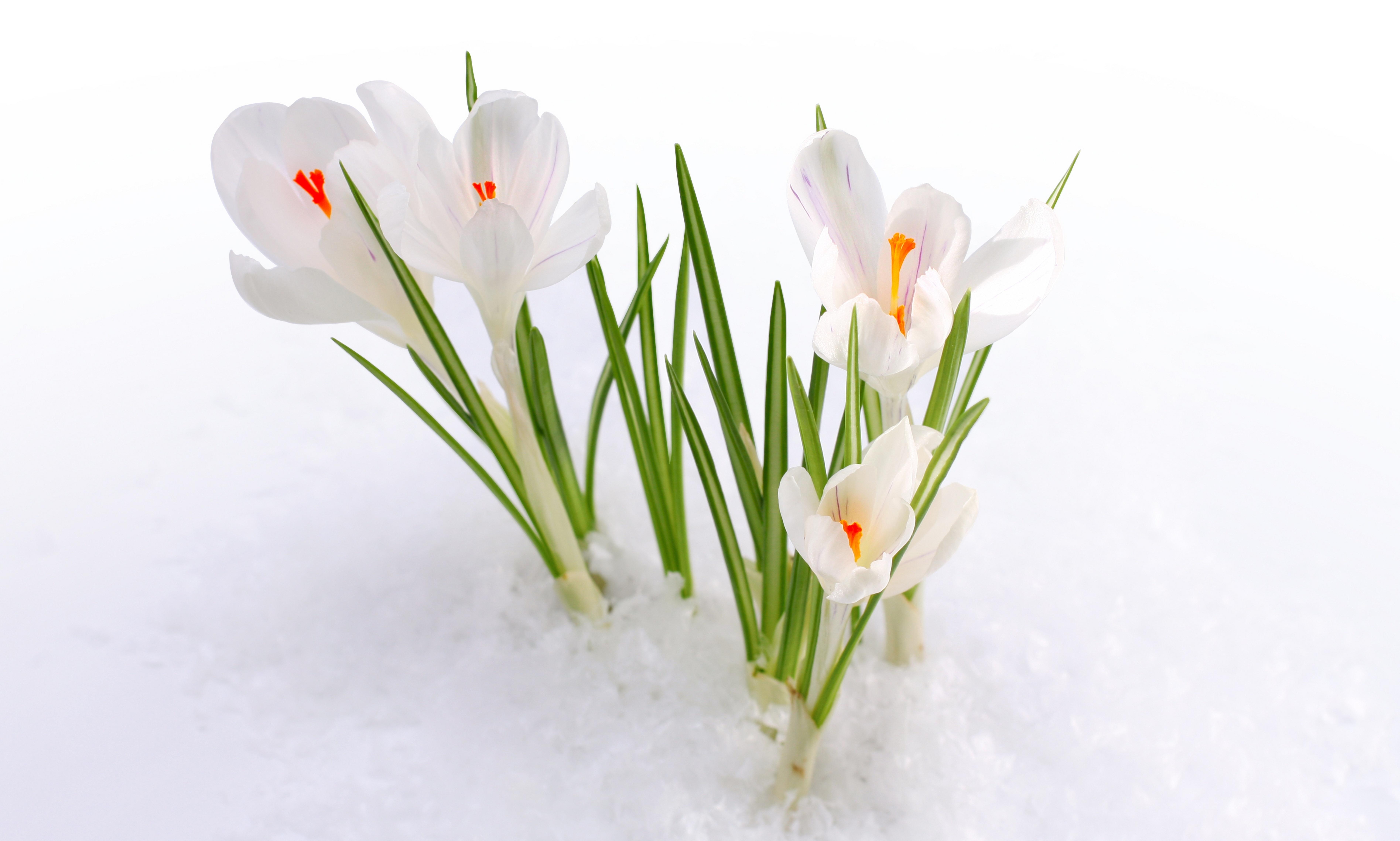 фото киев в снегу