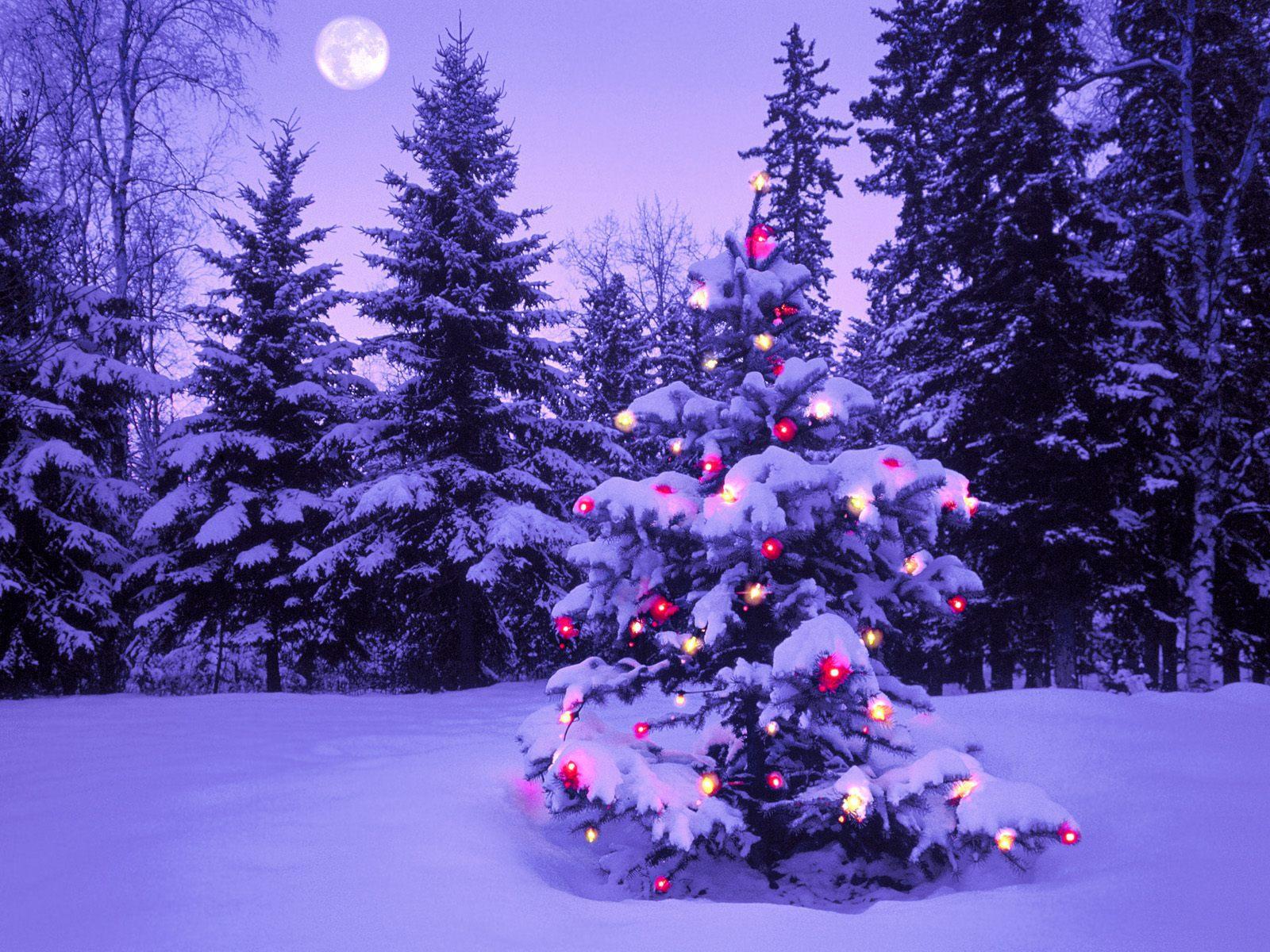входные фото елки в зимнем лесу открытки фото