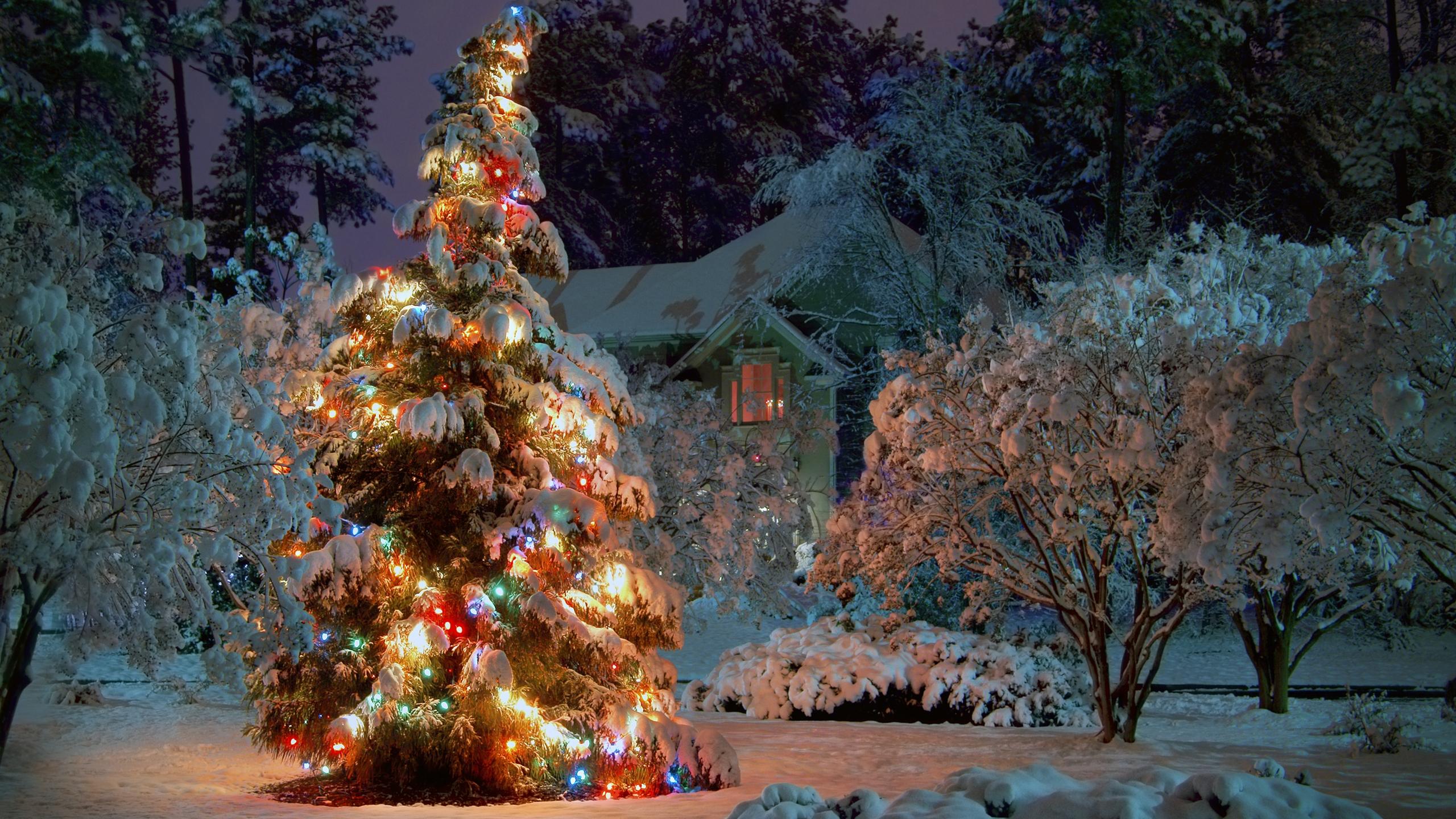 Новогодняя ёлка в лесу фото