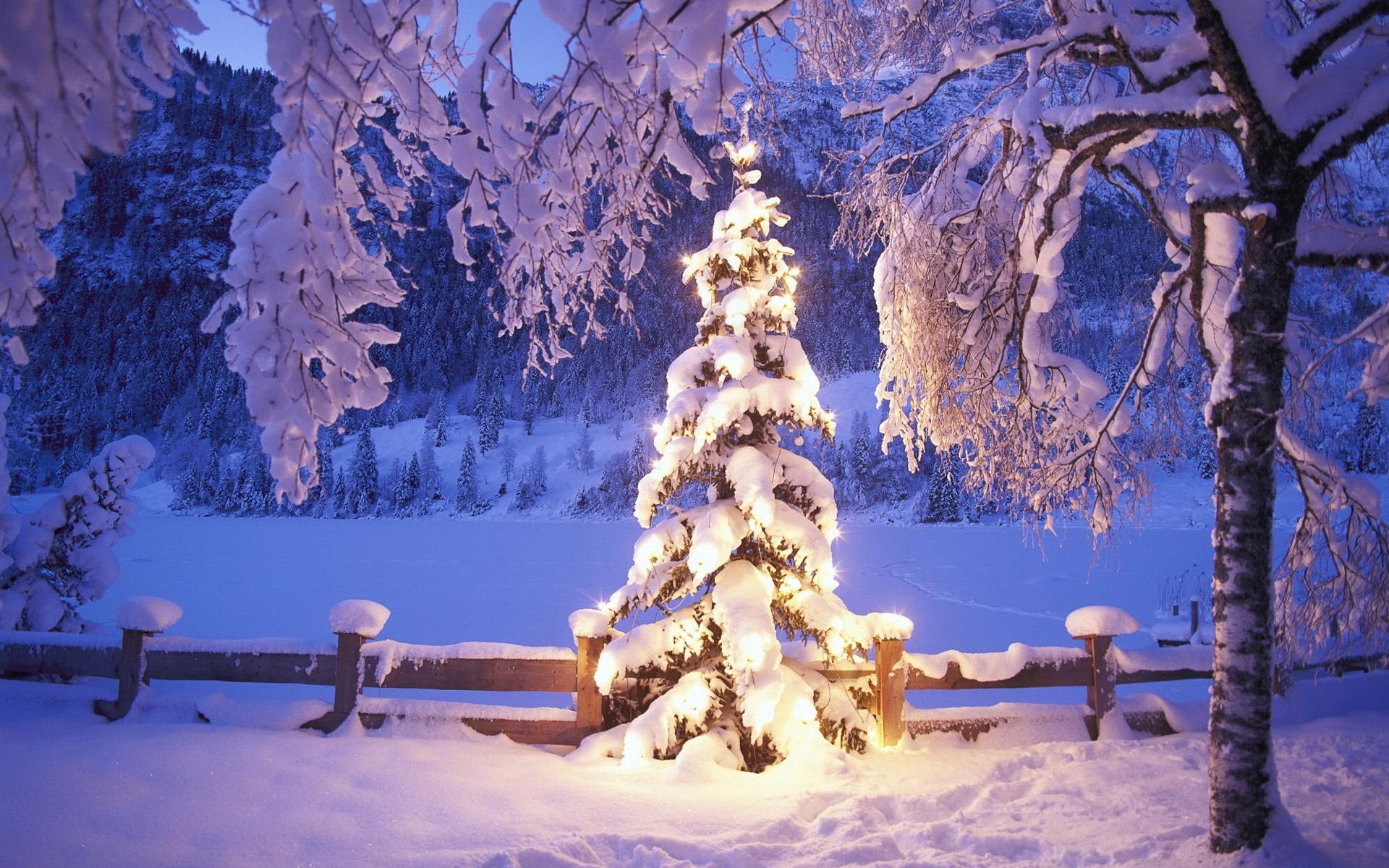 Новогодние картинки с елками в снегу