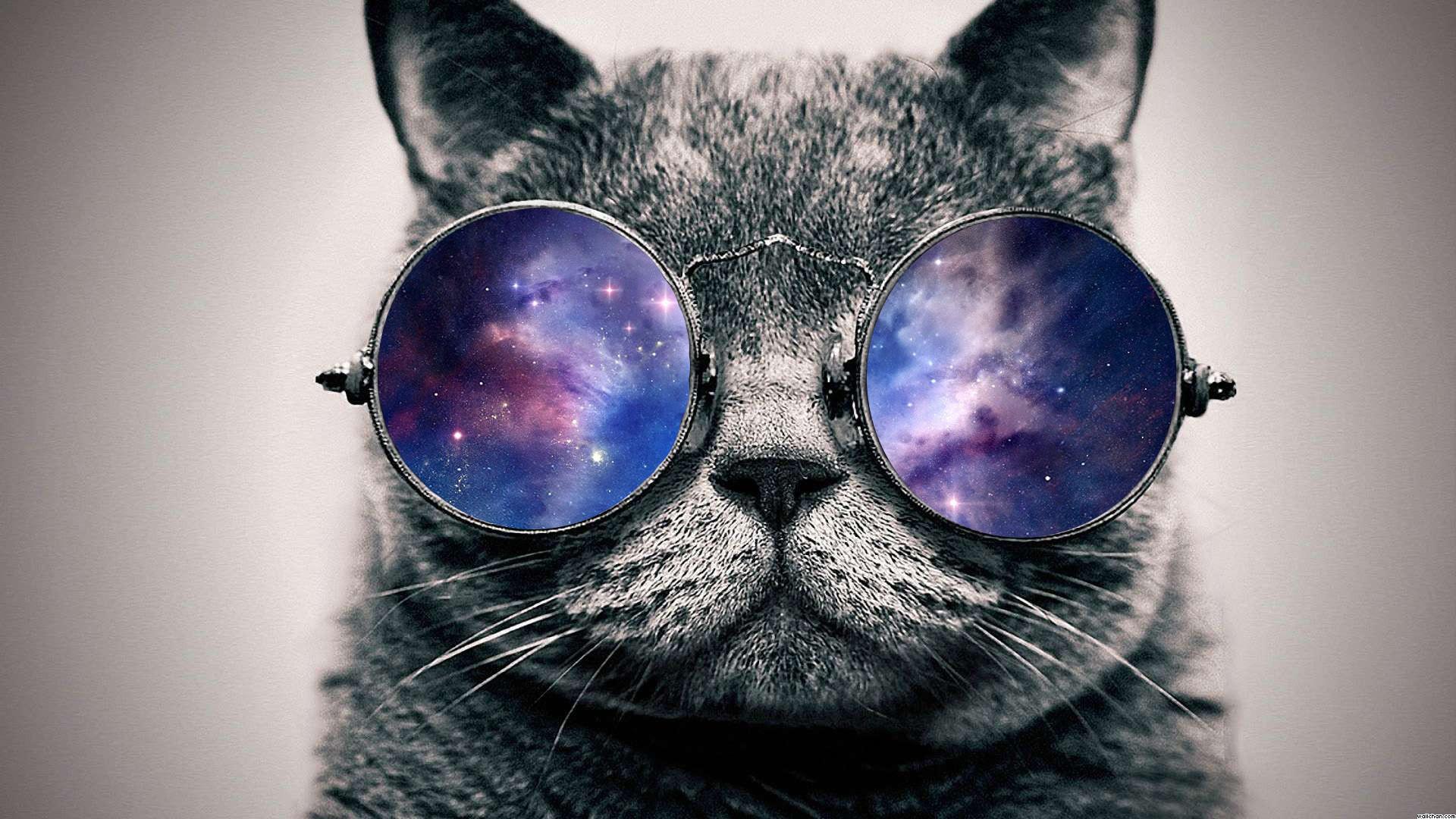 обои кот в космосе